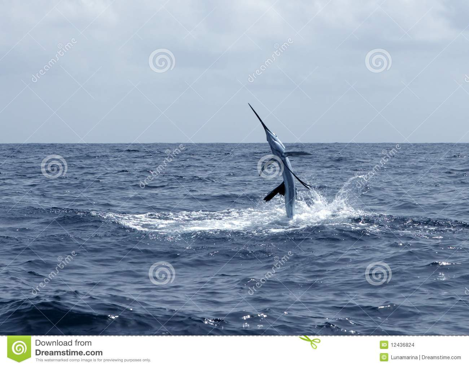 Sport för saltwater för fiskebanhoppningsailfish