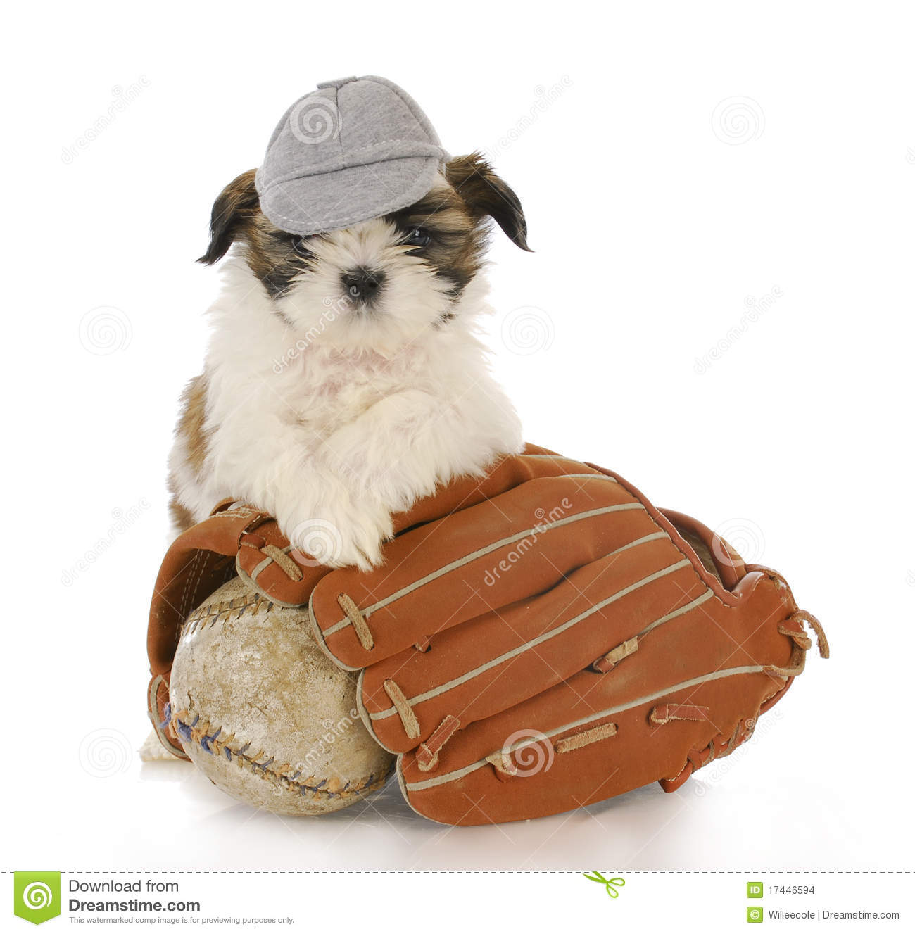 funny puppy in baseball hat isolated on white royalty