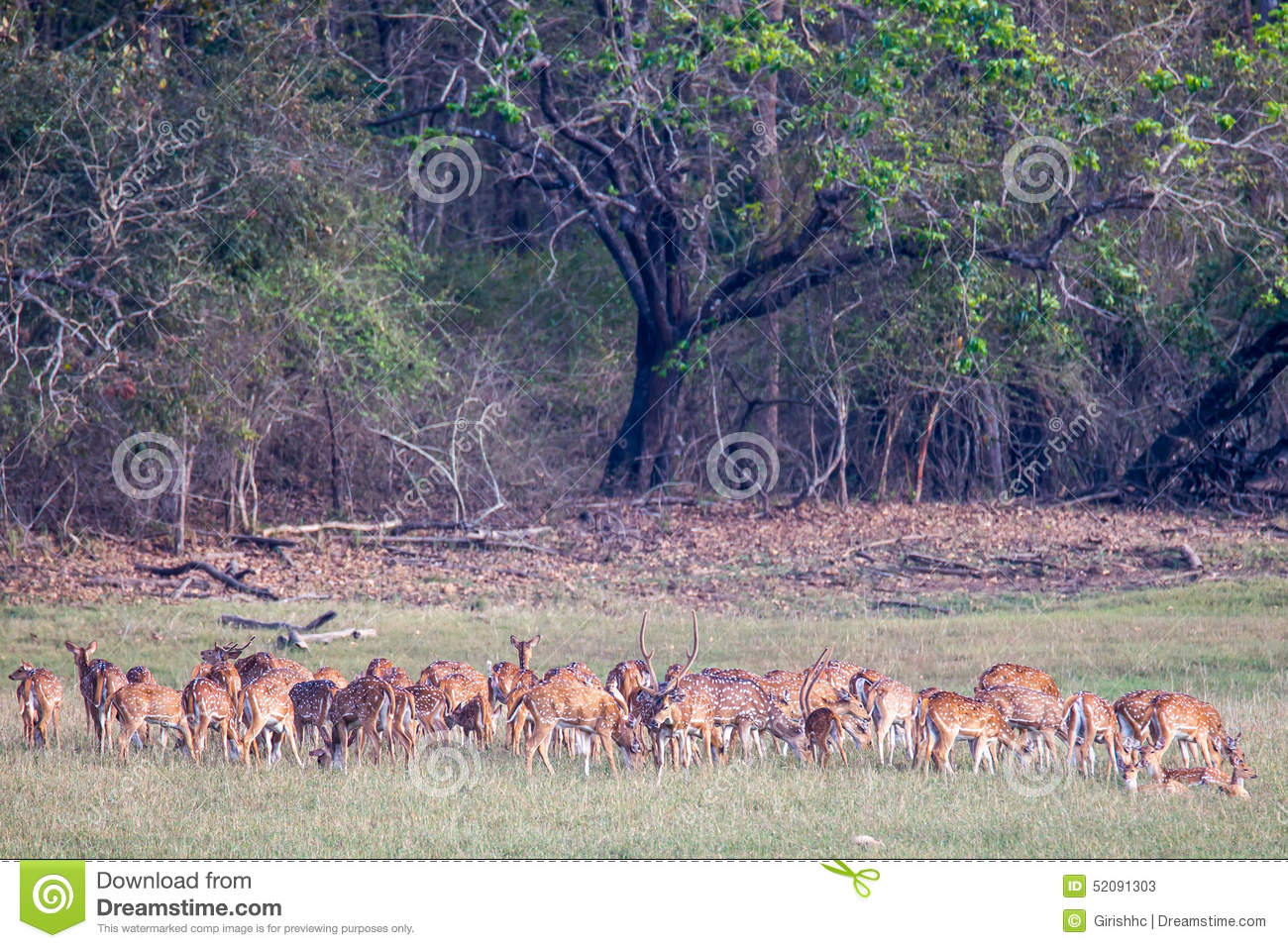 Spotted Deers And Birds Stock Image Image Of Affectionate 52091303