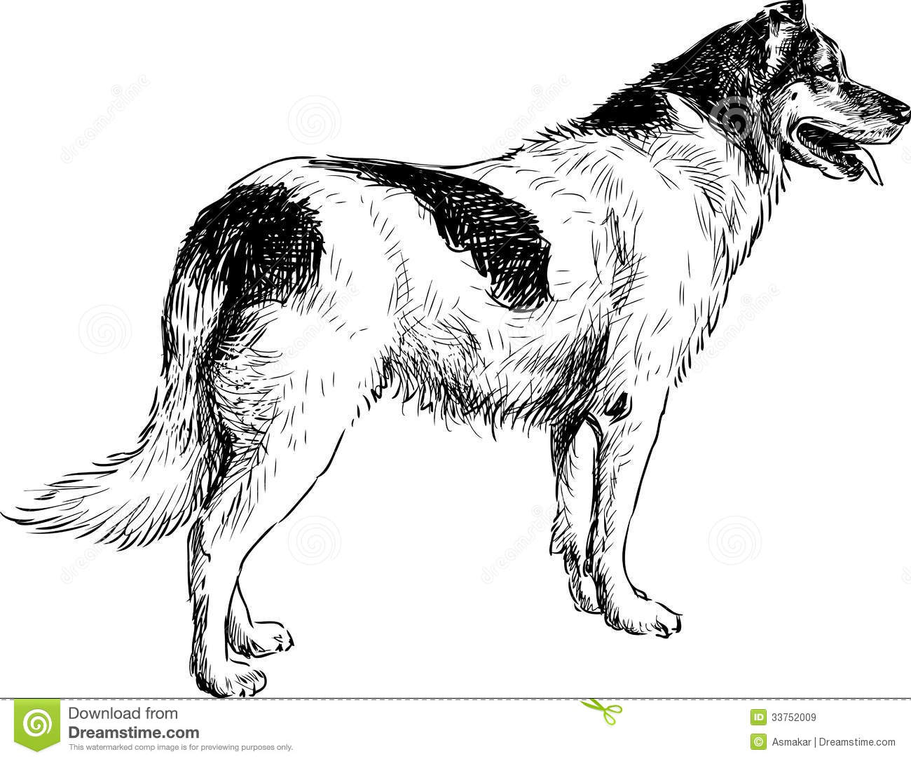 Vector drawing of the black and white spotted dog Dog Black And White Drawing