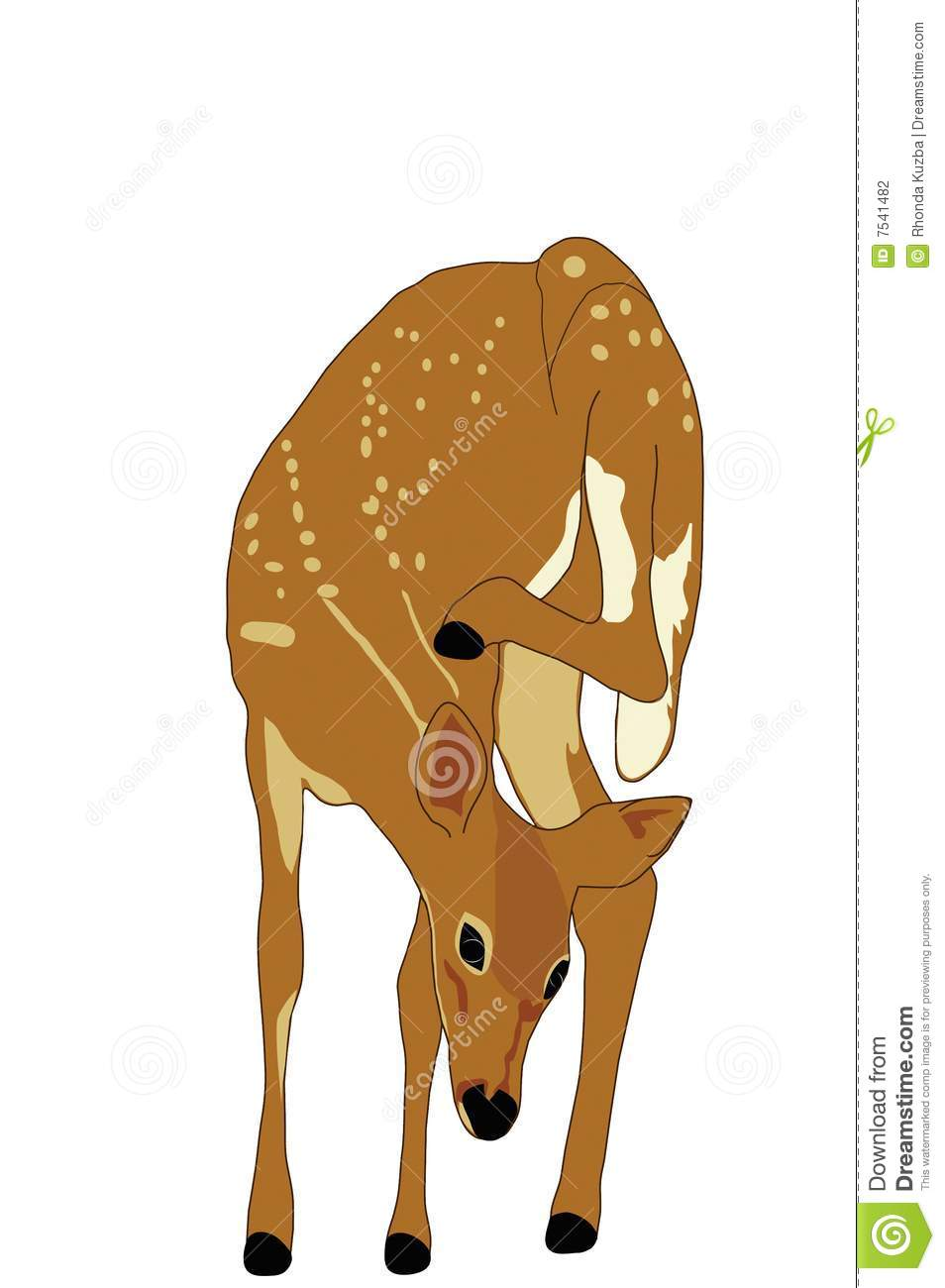 Spotted Fawn Illustration stock vector. Illustration of ...