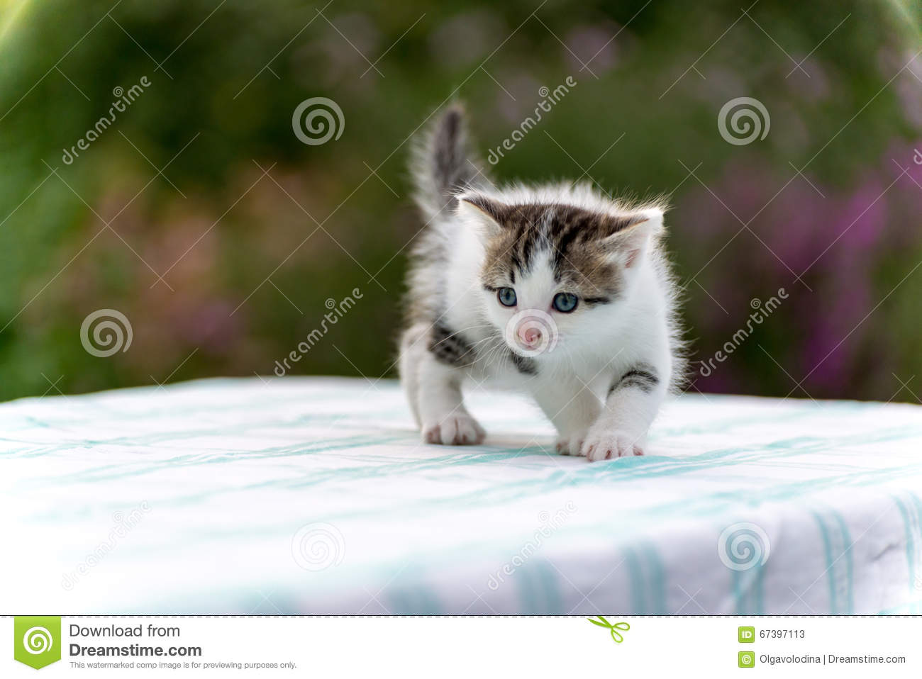 Spotted kitten standing on table in the garden