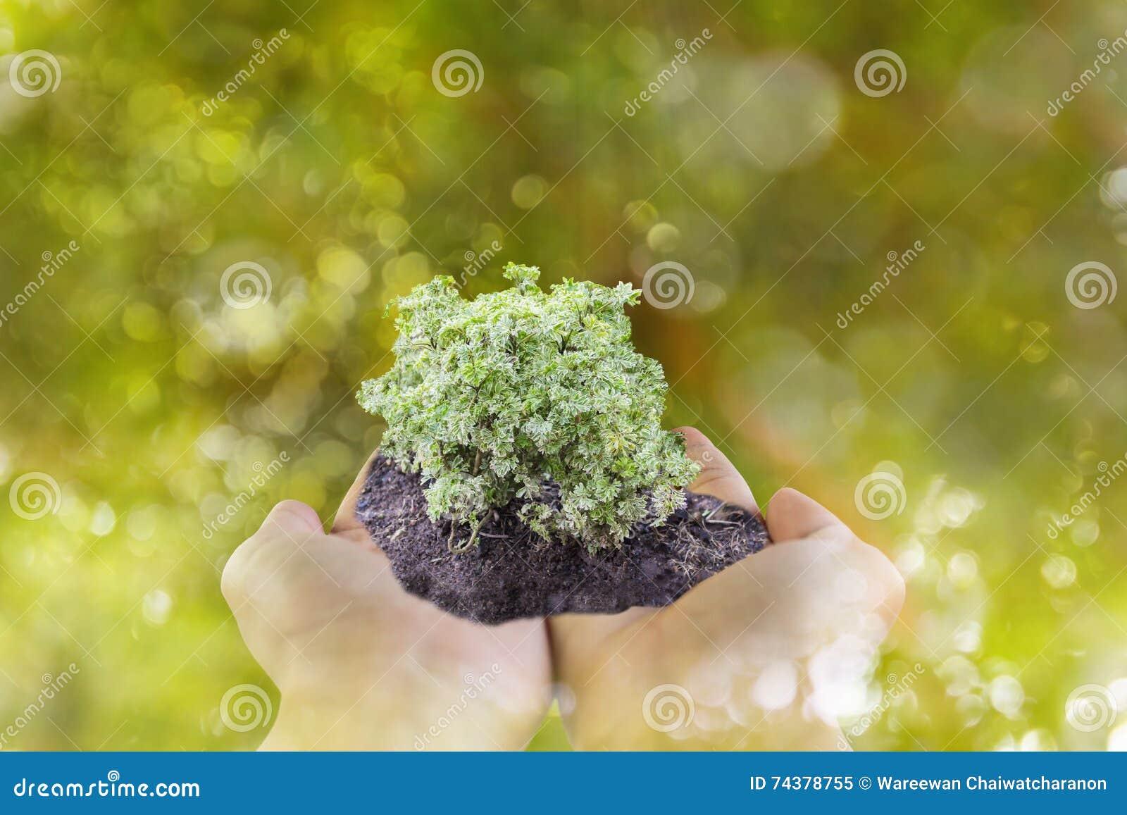 Sprössling oder Pflänzchen an Hand mit bokeh Grünbaum bokeh backgr