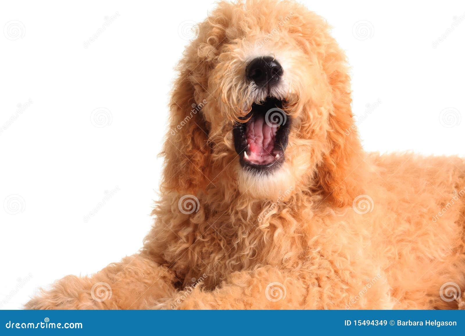 Sprechenhund