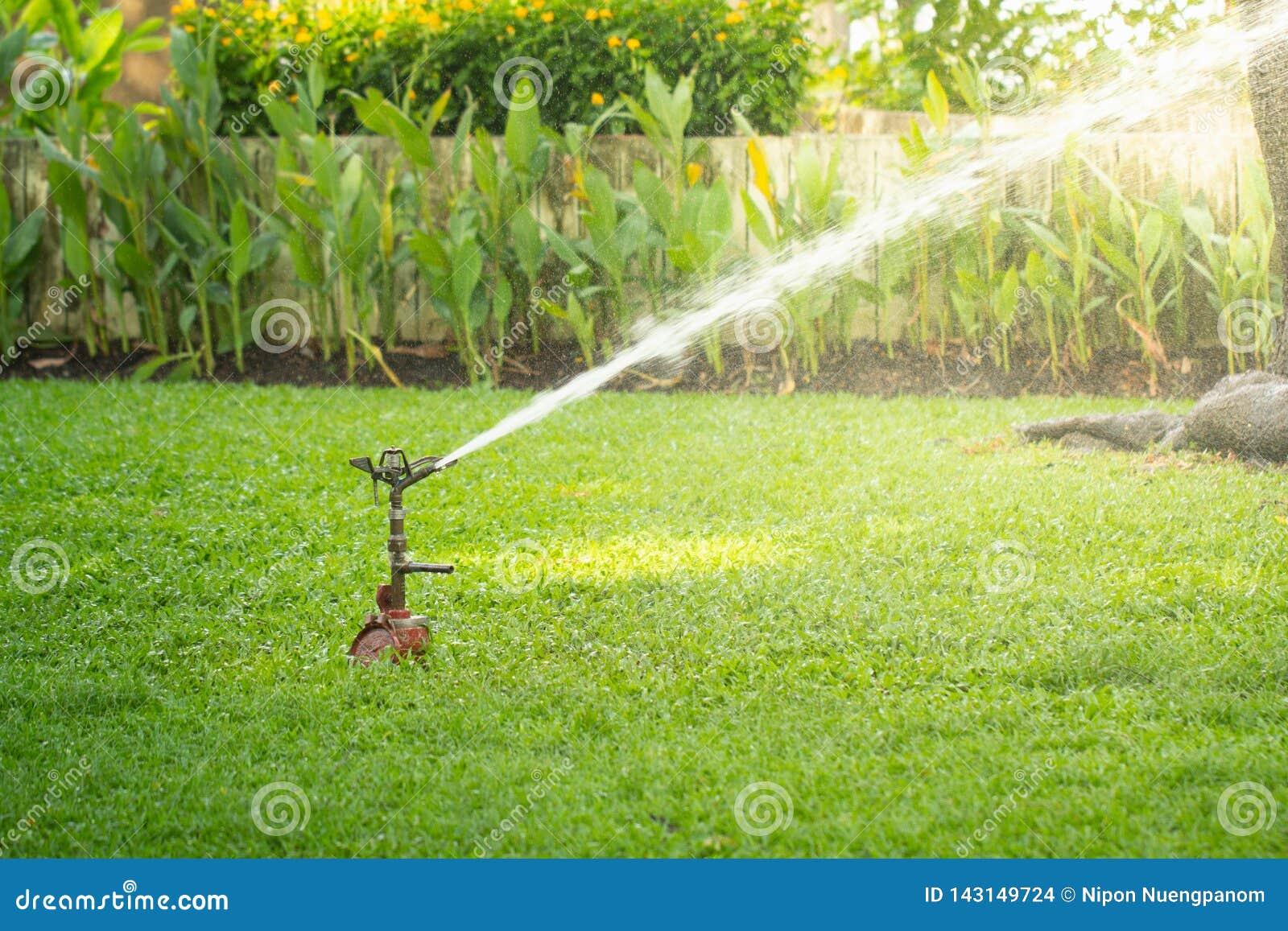 Spridare som bevattnar gräs i trädgård under solljus Gräsmattaspridare i handling