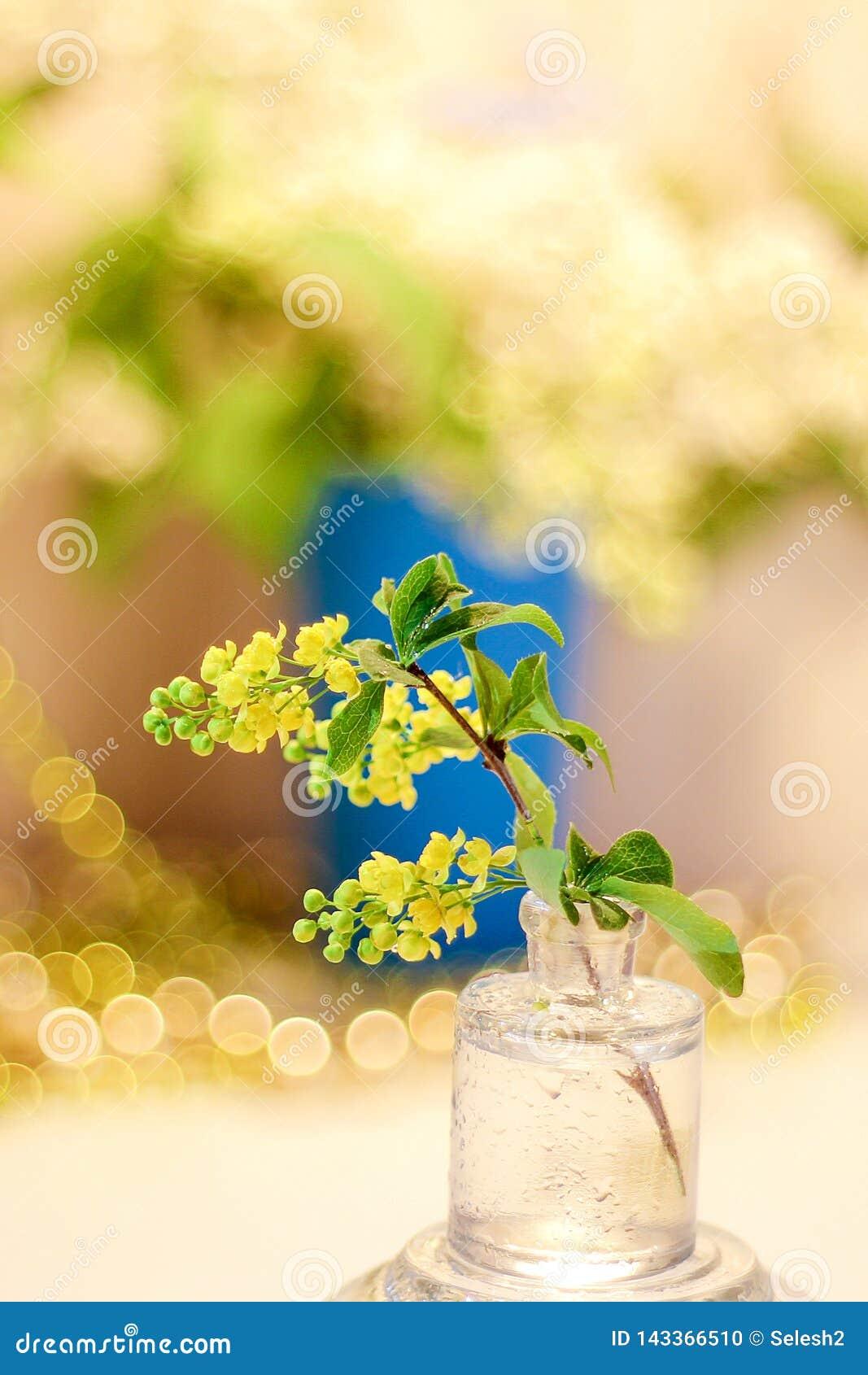 Sprig żółty berberys pospolity w szklanym słoju Bokeh w tle