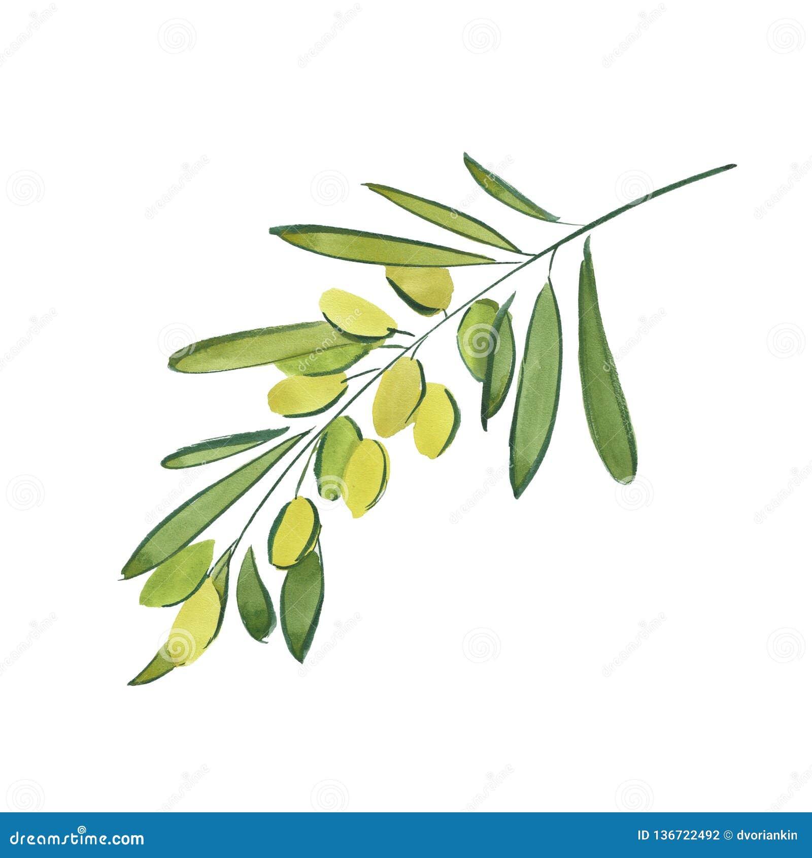 Sprig оливки