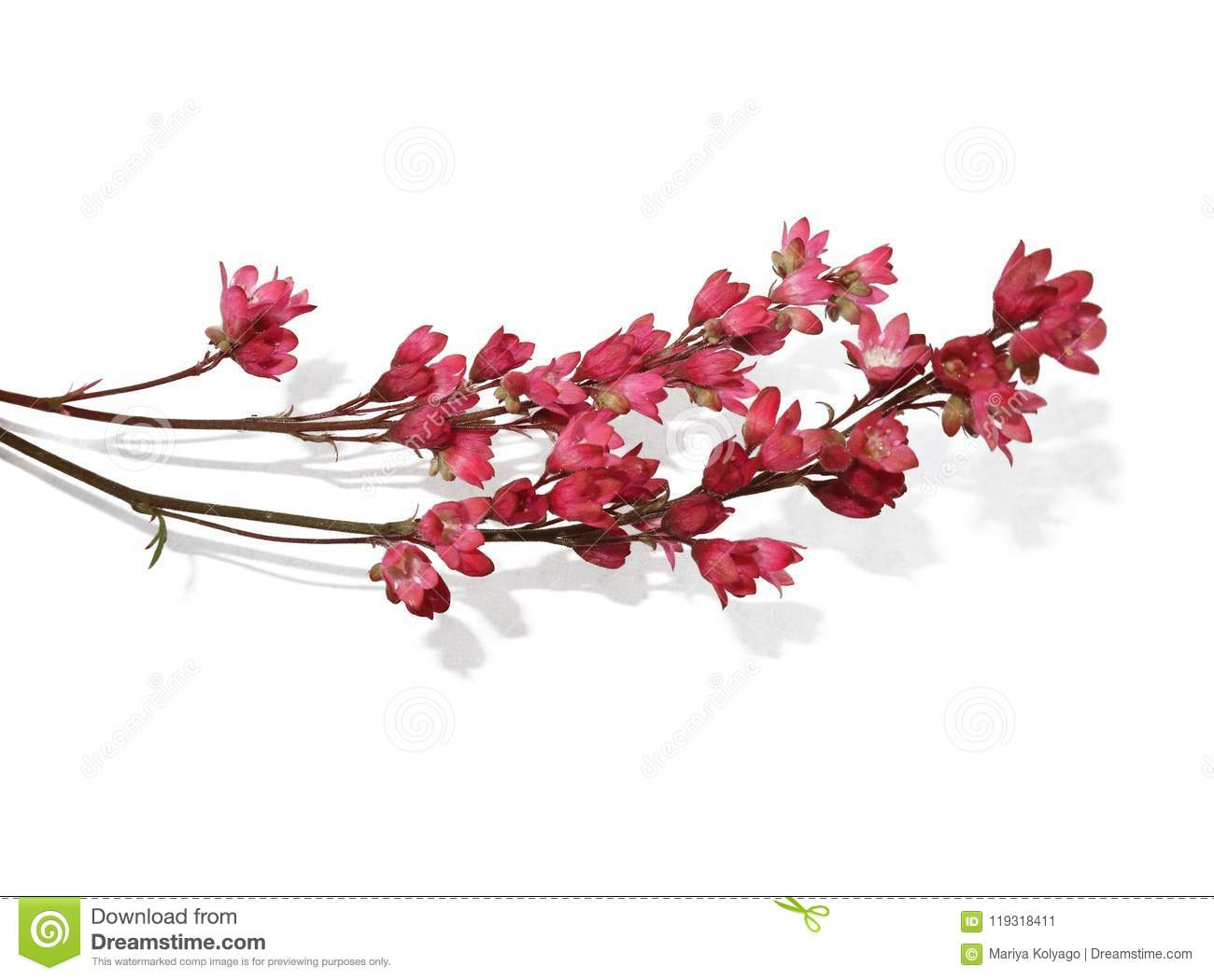 Sprig Of Small Pink Flowers On A White Background Stock Image