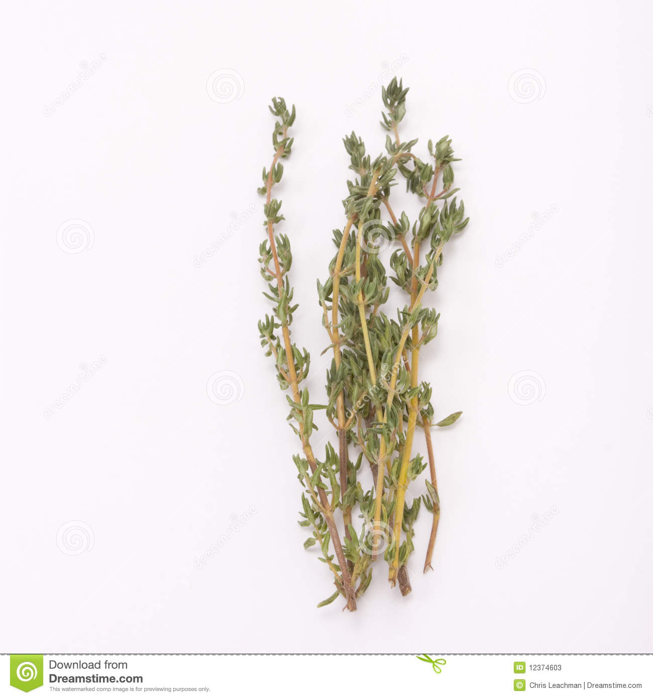 Sprig Of Thyme Stock P...