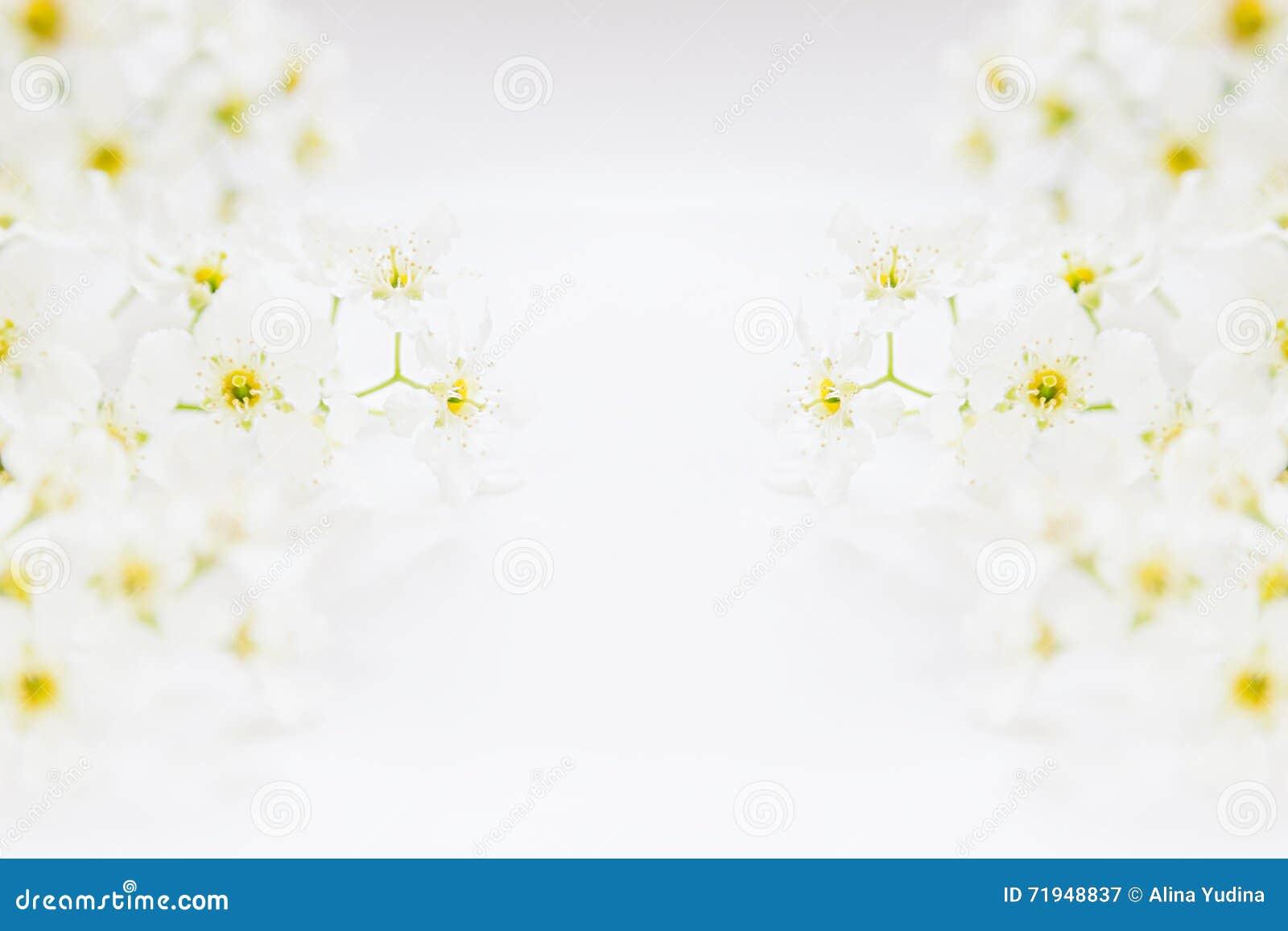 Sprigs птиц-вишни на воде с космосом экземпляра Граница, рамка вектор детального чертежа предпосылки флористический Весна, weddin