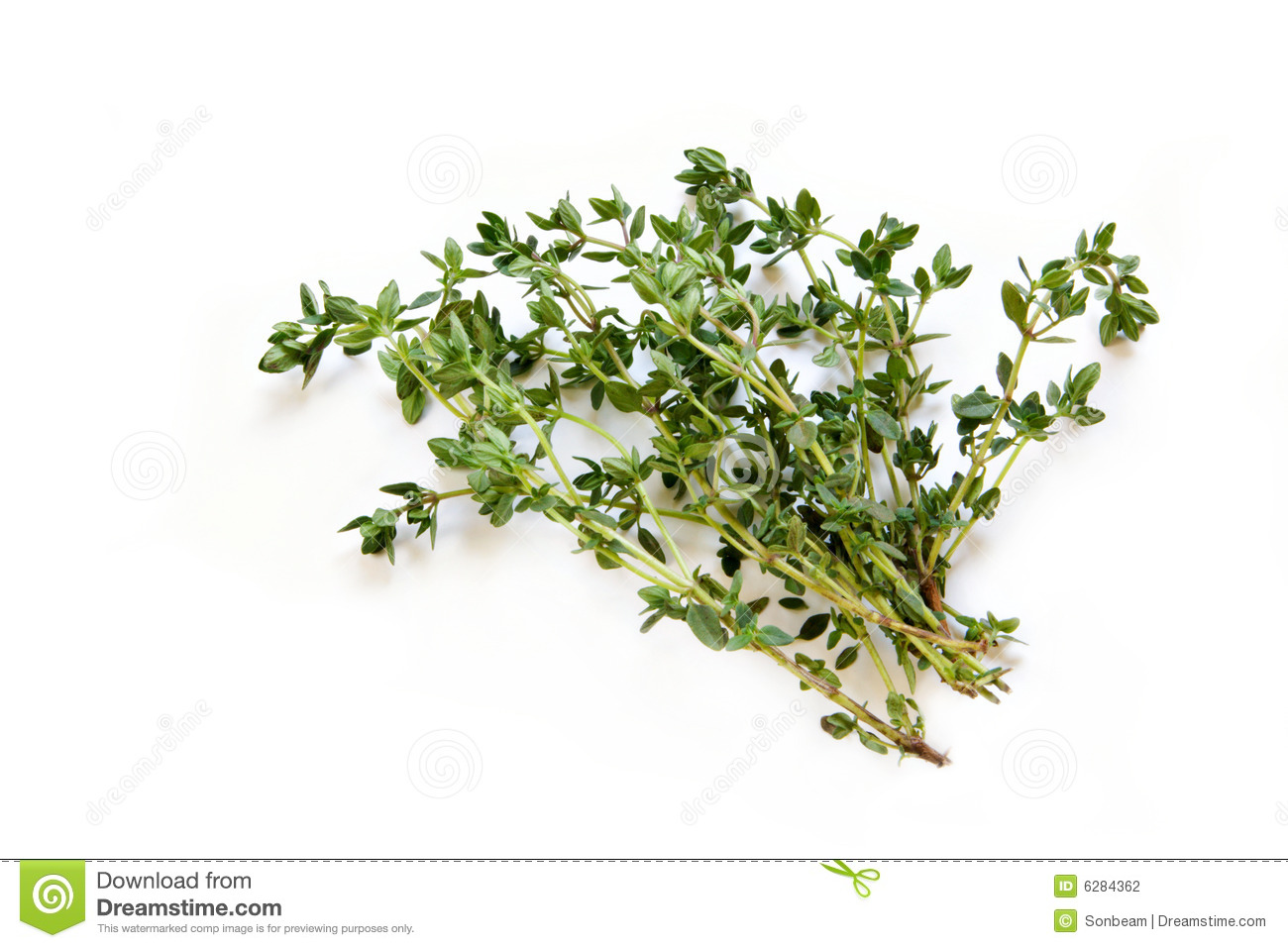 Sprigs of Thyme stock ...