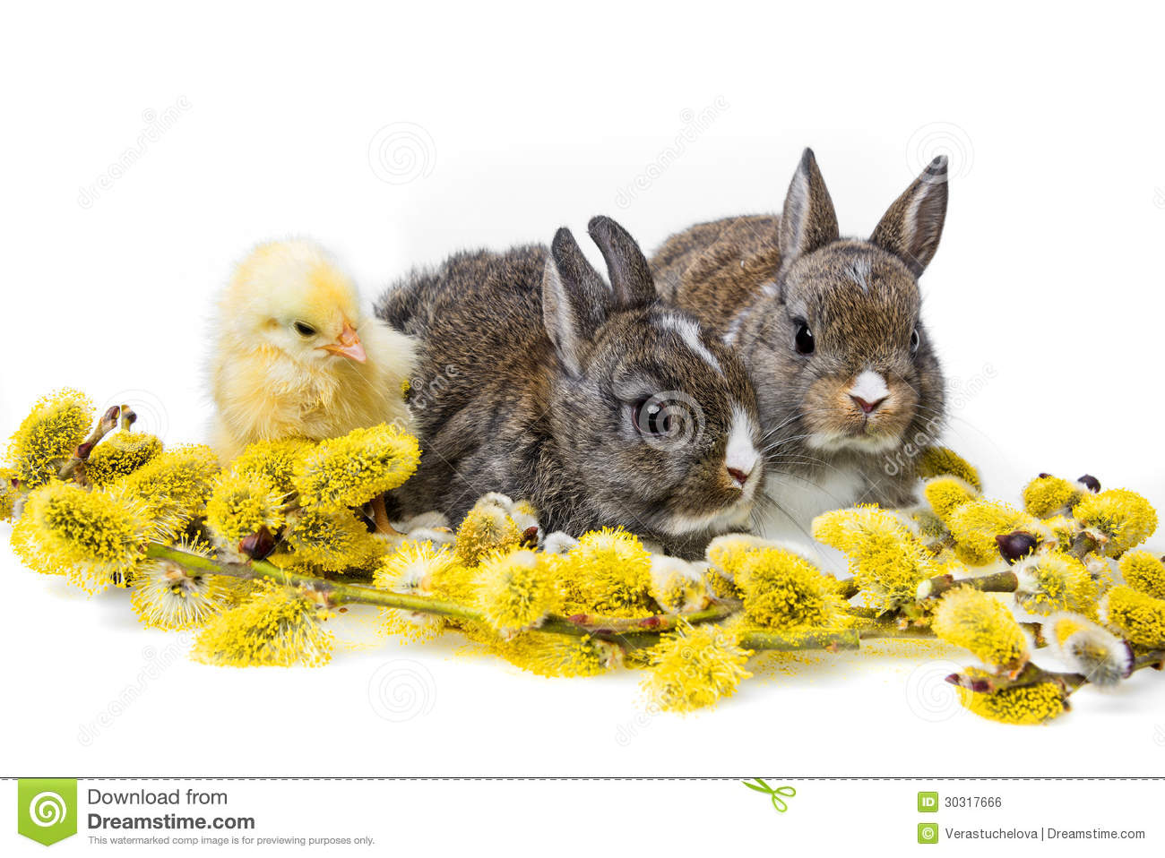 spring animals royalty free stock image image 30317666