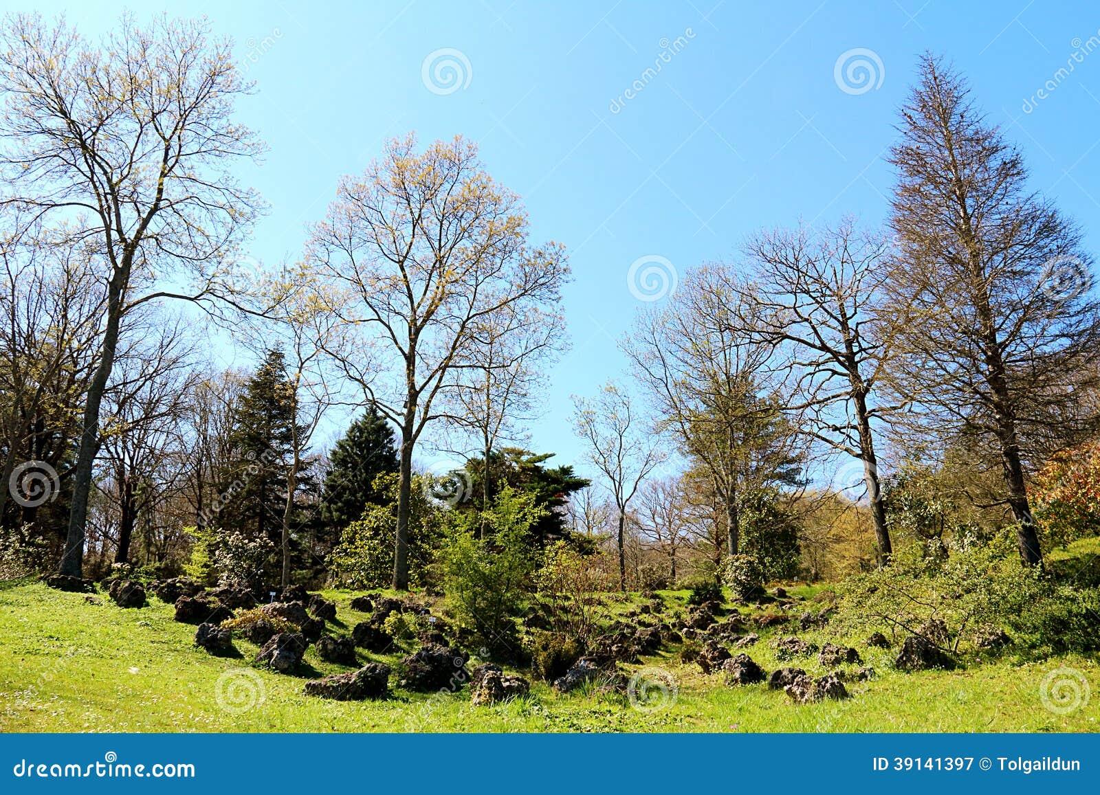 2014 Spring In Ataturk Arboretum Near Istanbul Stock Photo ...