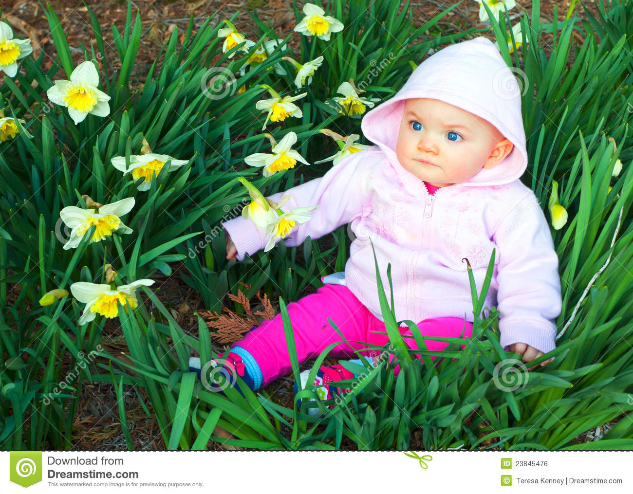 Infant girl sitting among pretty daffodils. Time period is very late ...
