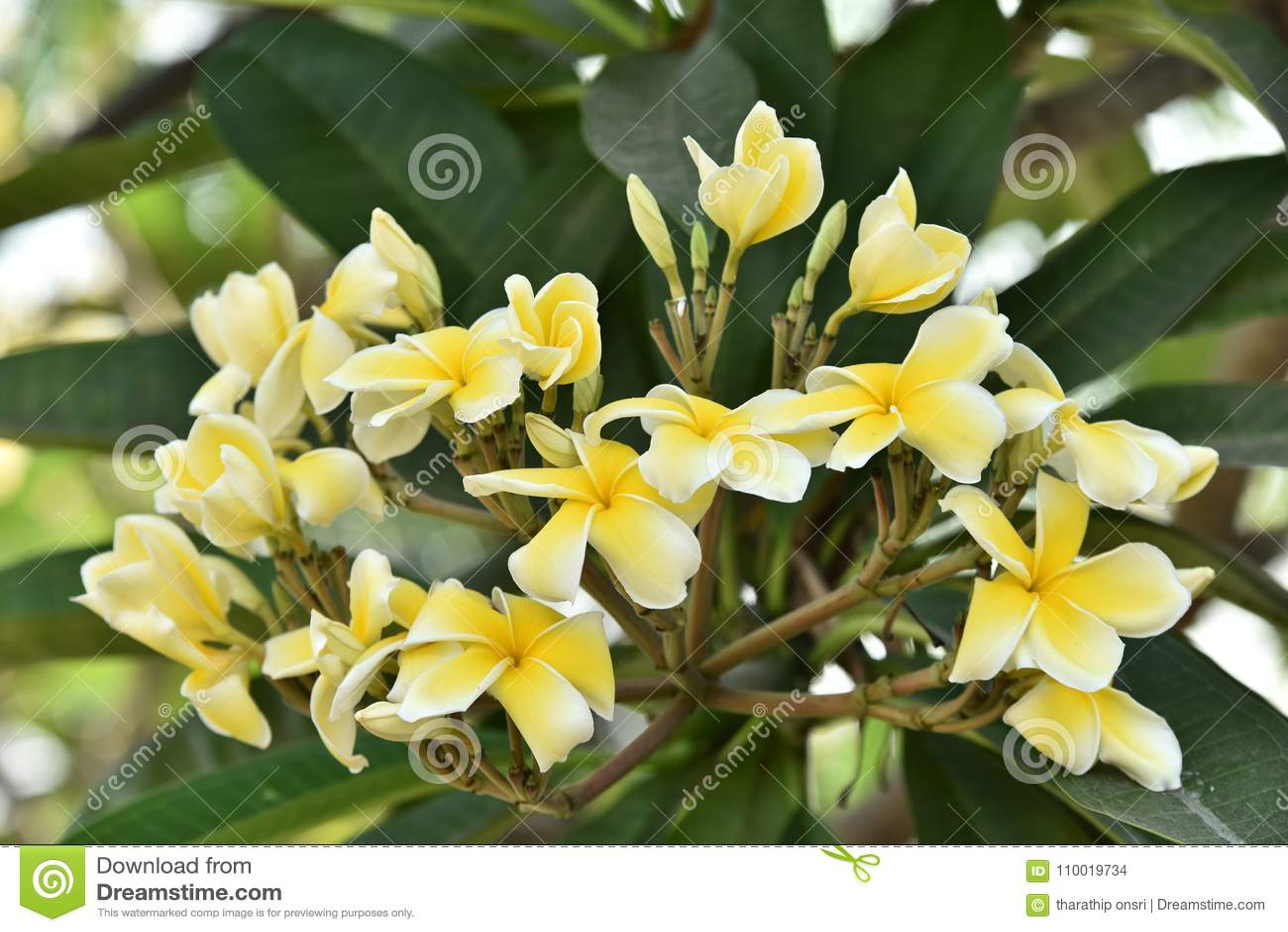 Spring background with beautiful yellow flowersllow flowers on a download spring background with beautiful yellow flowersllow flowers on a green background stock photo mightylinksfo