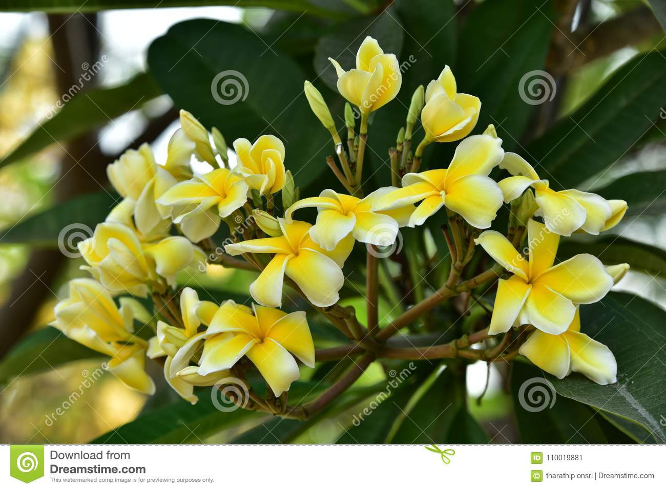 Spring Background With Beautiful Yellow Flowersllow Flowers On A