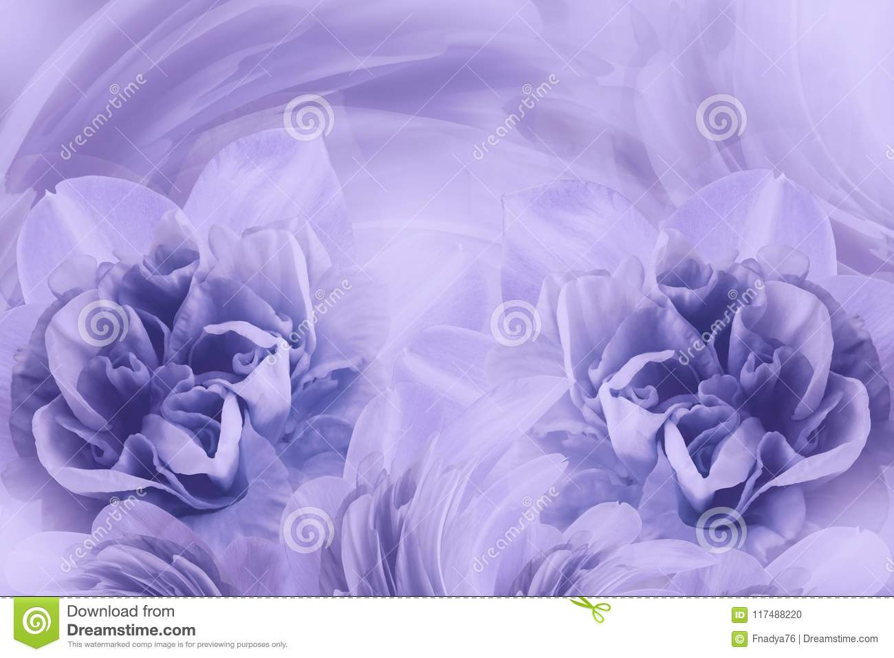 Spring Background Of Gently Light Purple Flowers Of Narcissuses