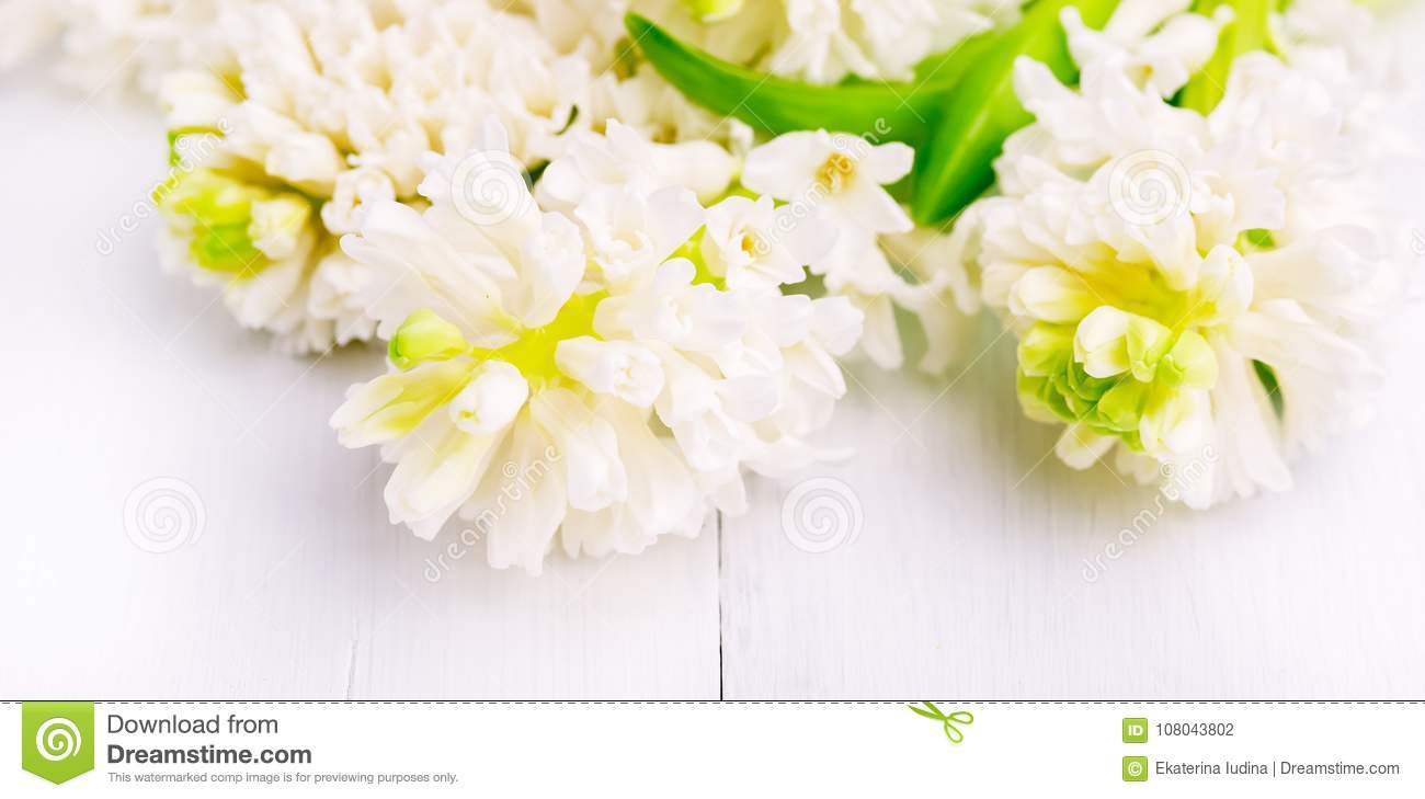 Spring Background With Hyacinths Background With Spring Flowers