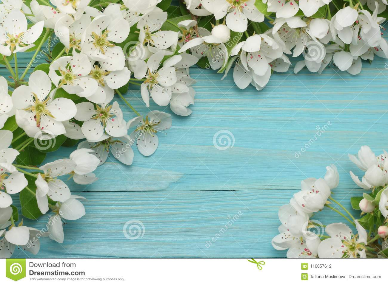 Spring background with white flowers blossoms on blue wooden background. top view
