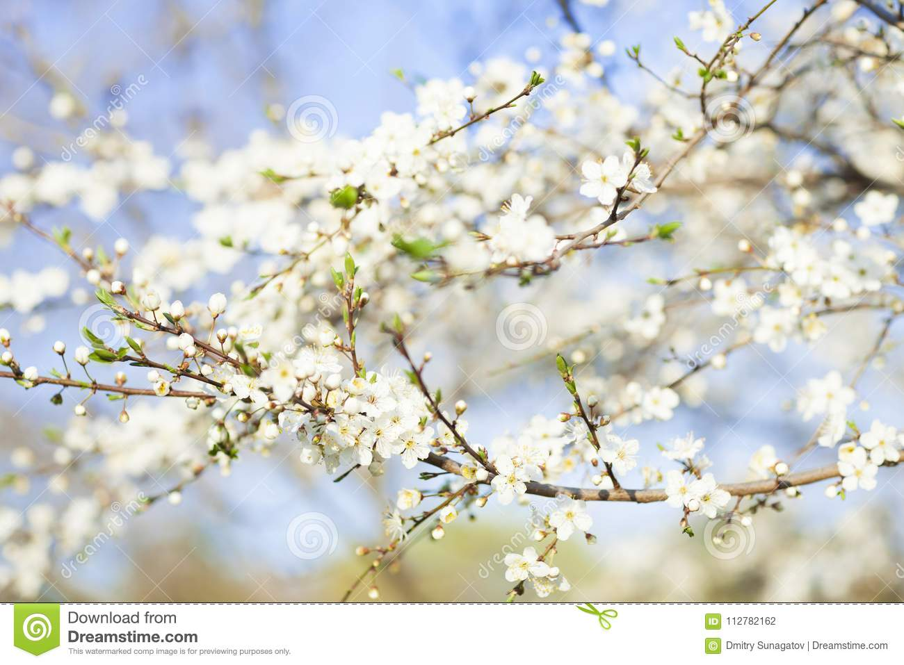 Spring beauty background blooming white flowers of trees stock spring beauty background blooming white flowers of trees mightylinksfo