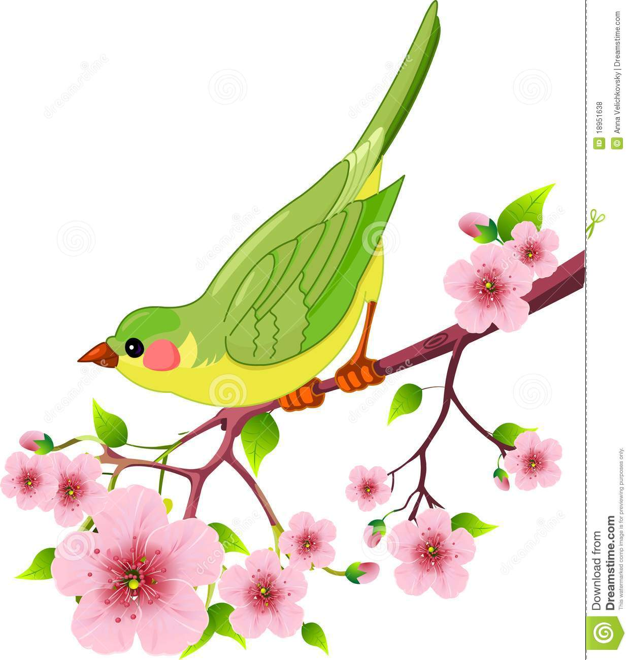 Cute bird sitting on blossom tree branch. Isolated on white background ... Beautiful Fairy Pictures