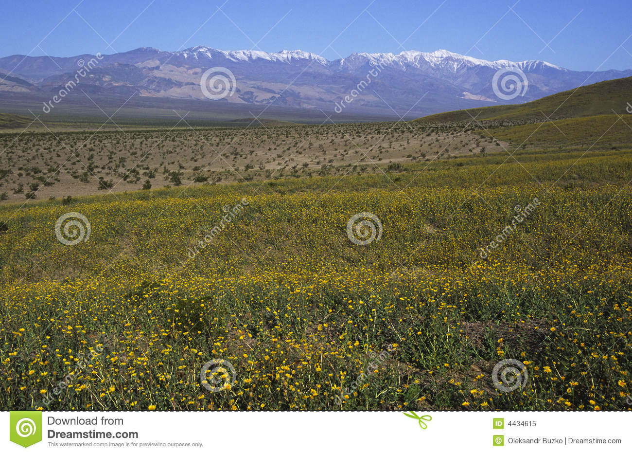 Spring bloom in death valley stock image image of national park spring bloom in death valley mightylinksfo