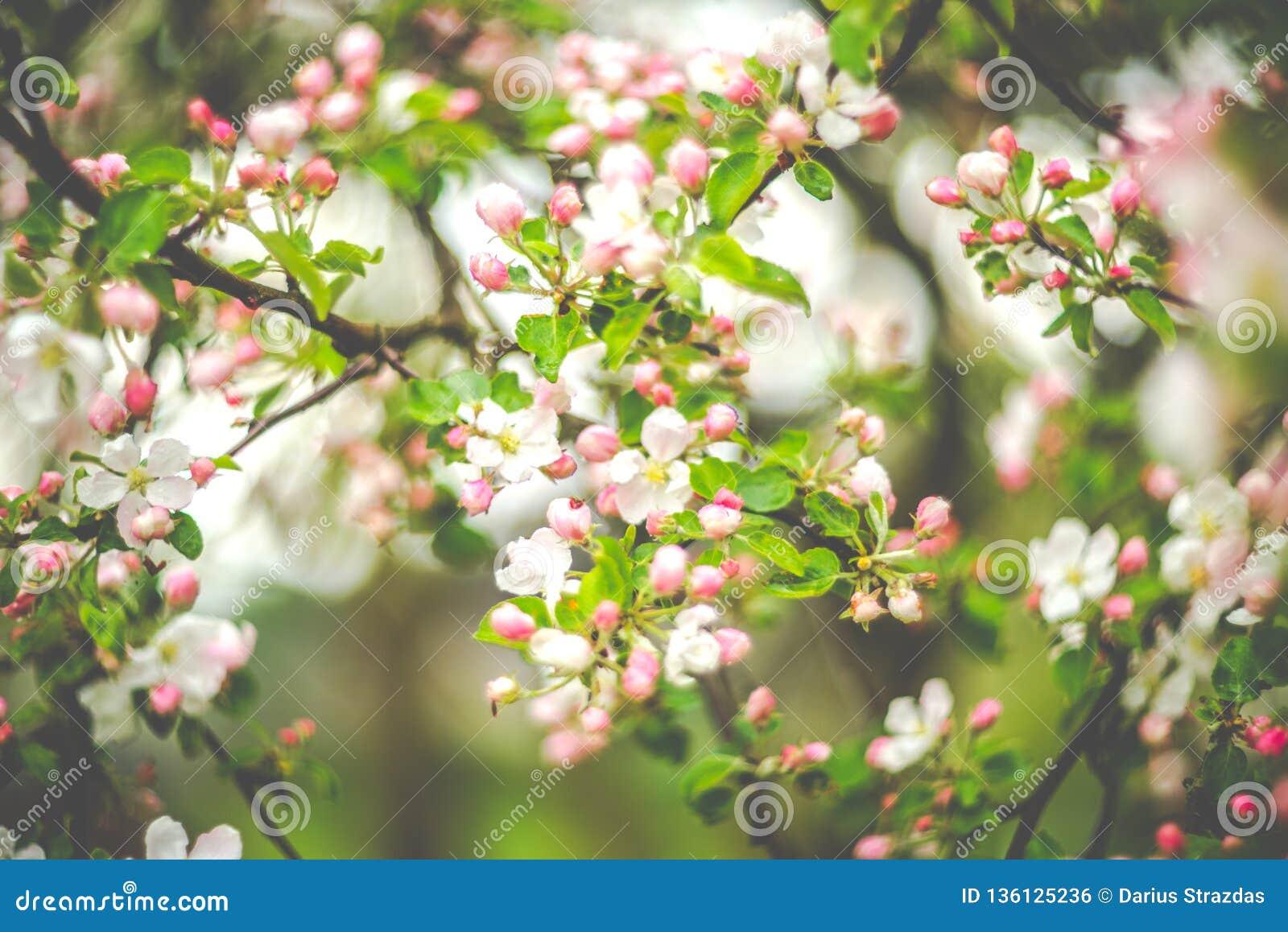 Spring blooming in pink