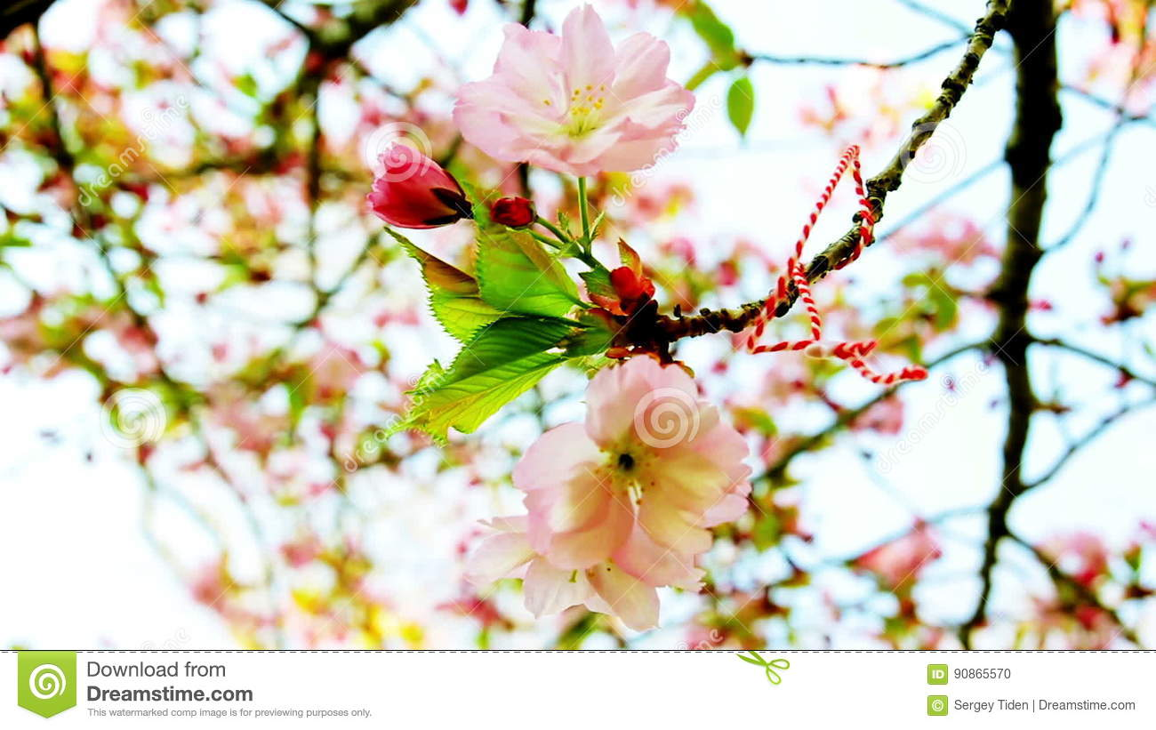 Sakura Tree Flower