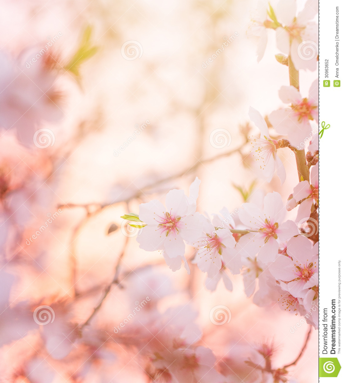 spring blooming tree dreamy sunny background stock