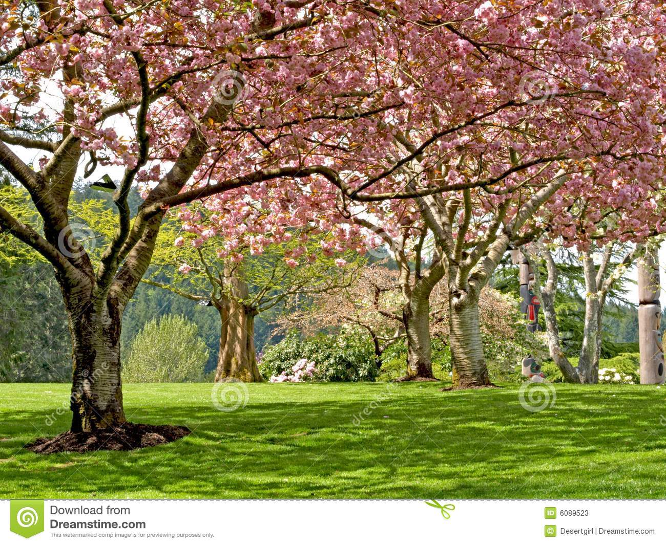 Spring Blooming Trees Stock Image Image Of Forest Trees 6089523