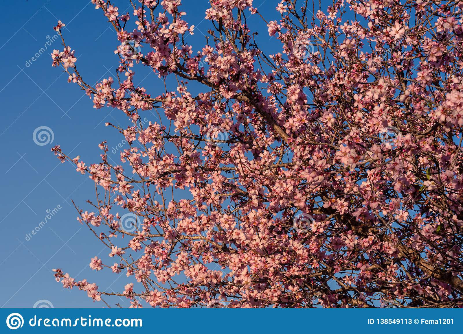 Spring blossom background. Beautiful nature scene with blooming tree and sun flare. Spring almond flowers. Beautiful Abstract