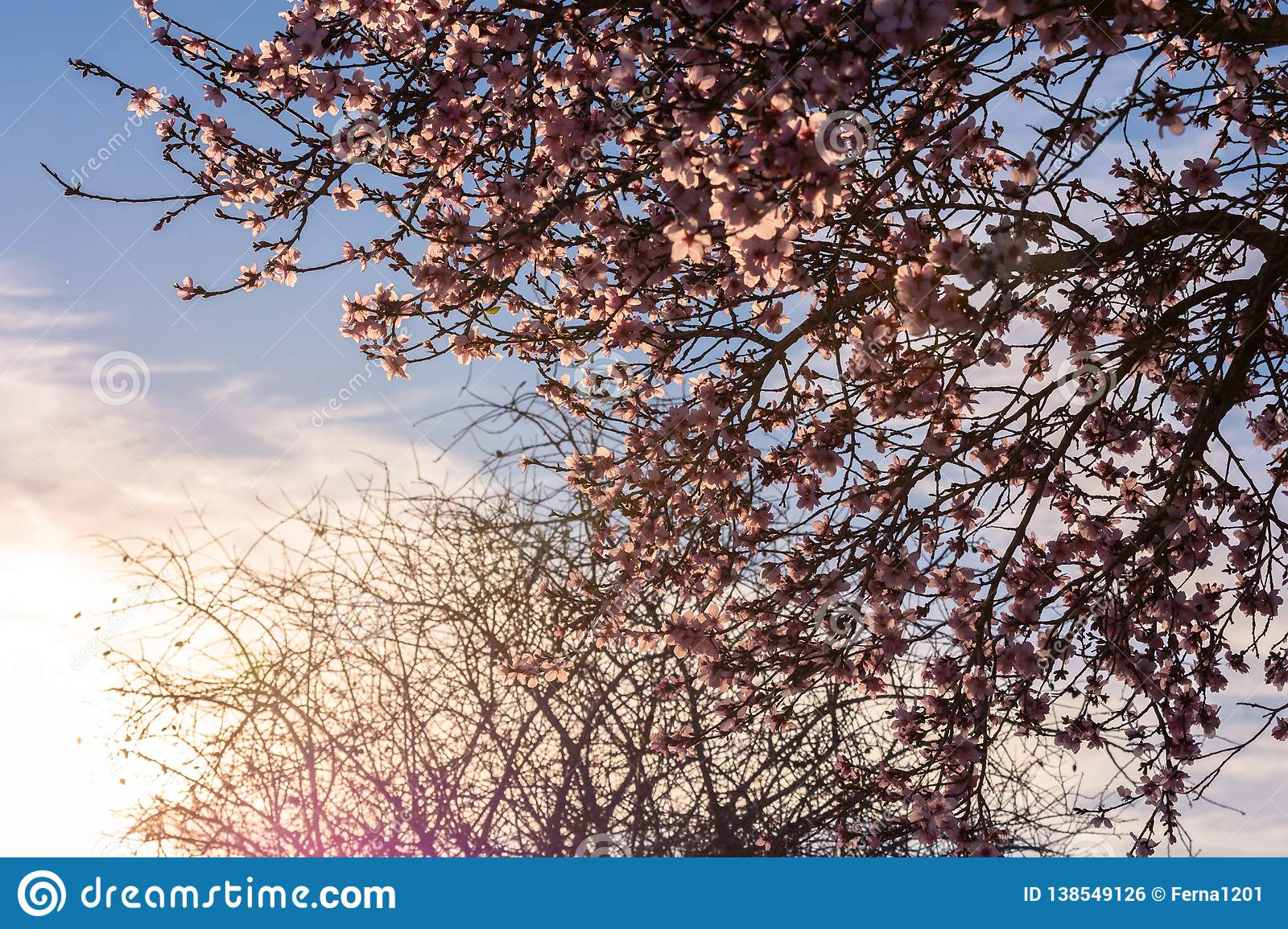 Spring blossom background. Beautiful nature scene with blooming tree and sun flare. Sunny day. Spring flowers. Beautiful Orchard.