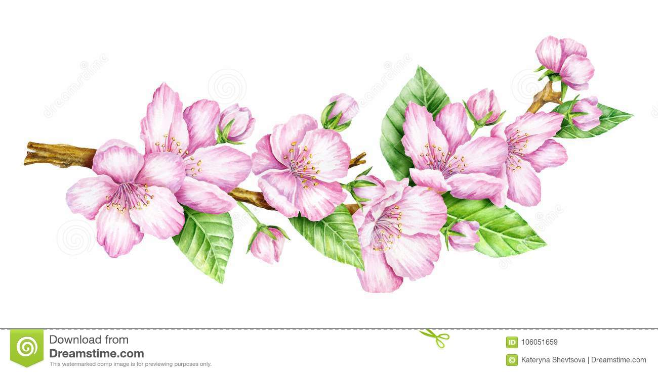Spring Blossom Cherry Pink Flowers Blooming Branch Stock