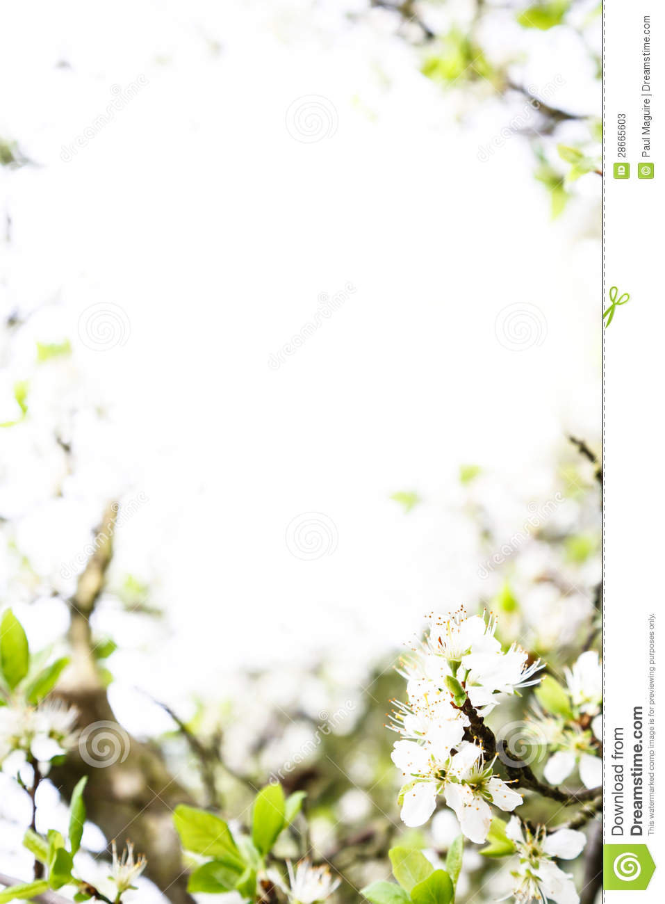 spring template