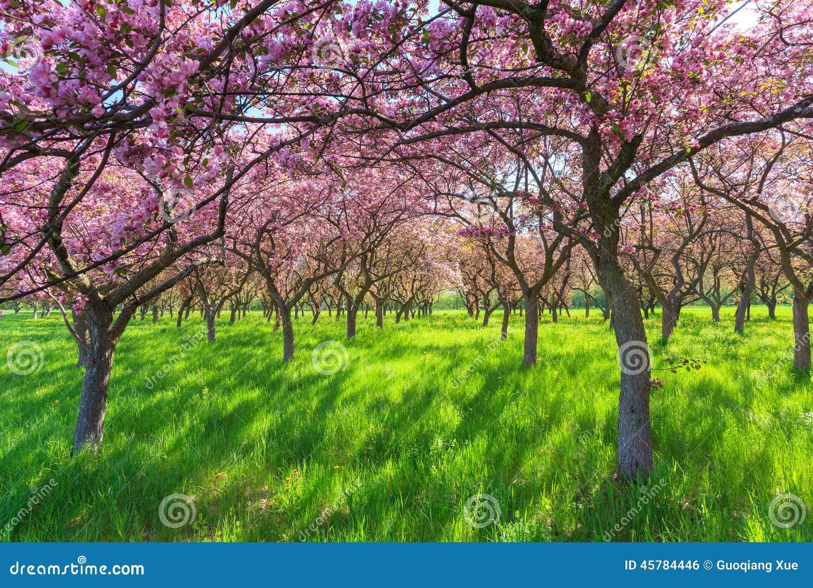 park spring blossom - photo #10