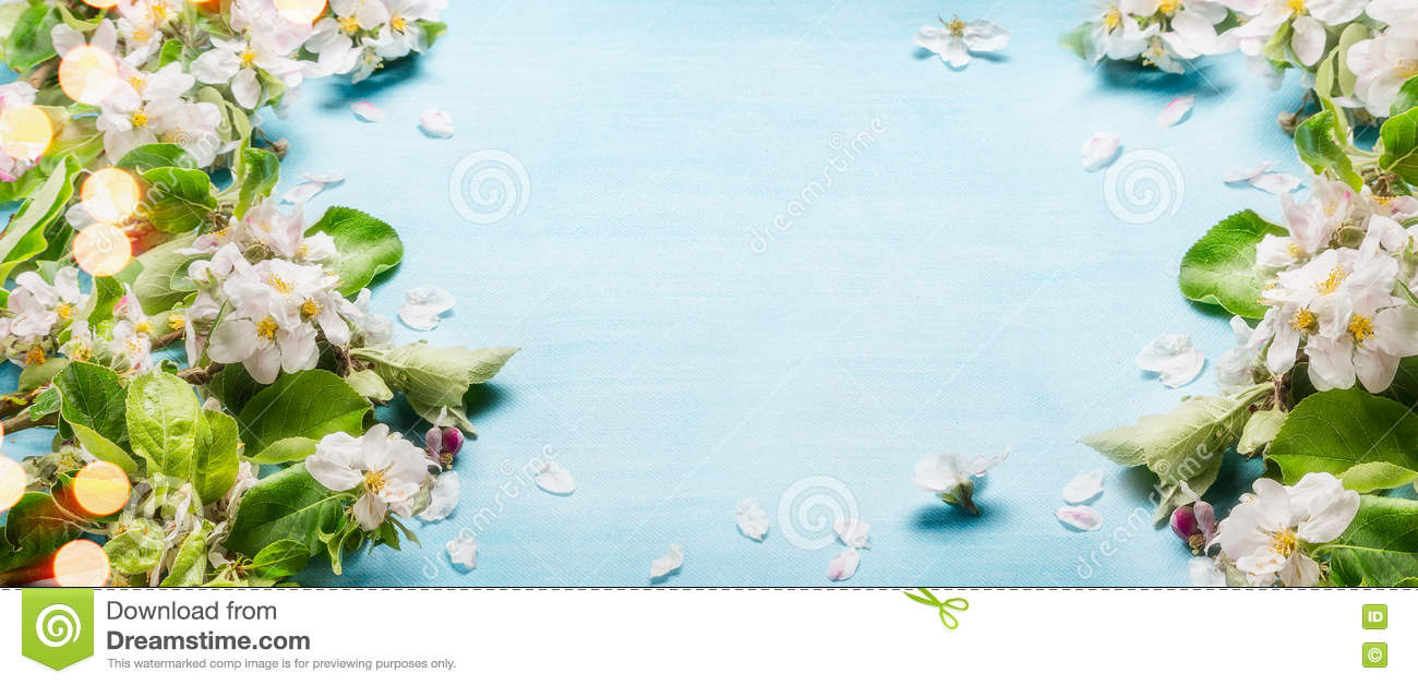 Spring blossom twigs on blue turquoise background, top view, frame, border Springtime