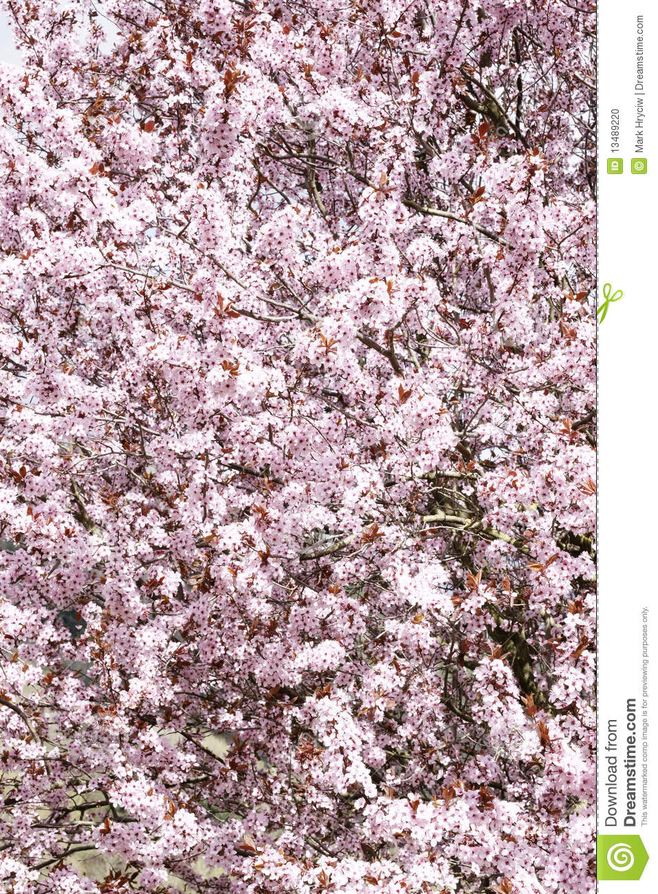 Spring Blossoms Pink