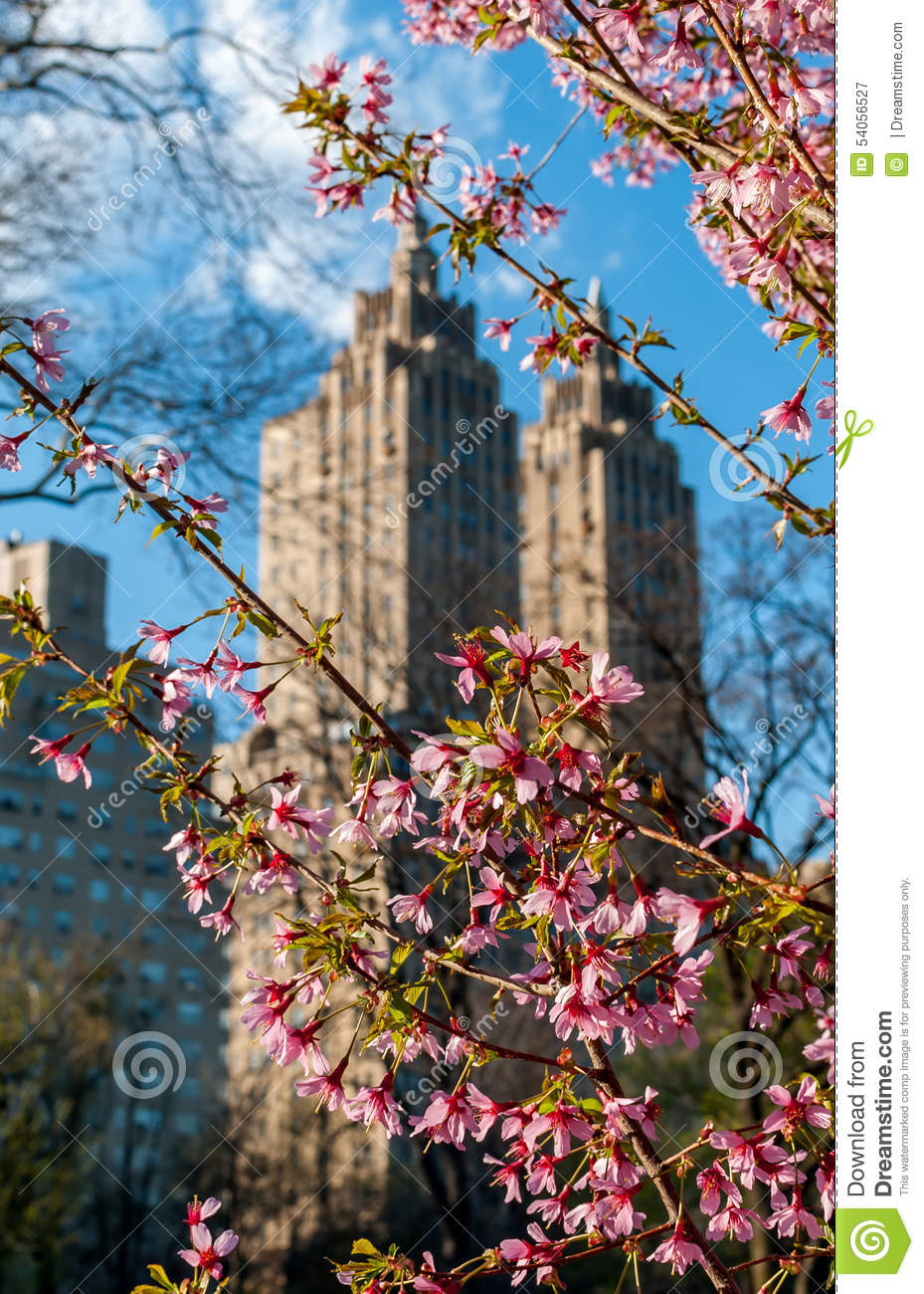 Spring blossoms with urban background