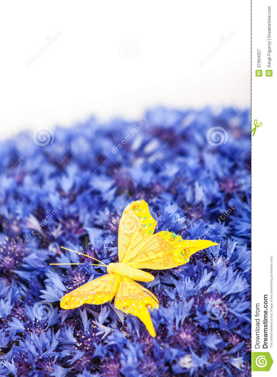 Spring Blue Cornflower With Yellow Butterfly Stock Image Image
