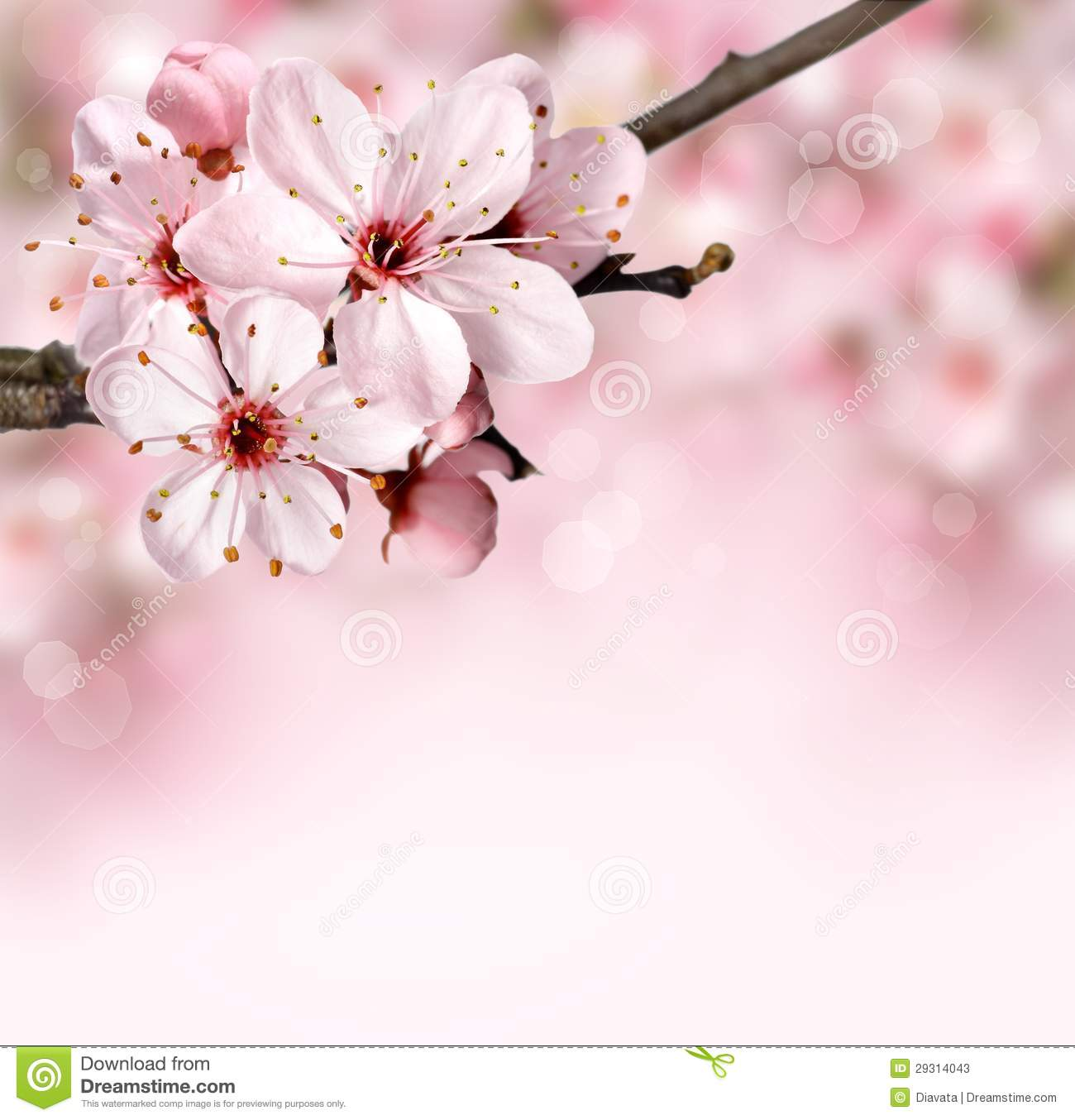 Spring Border Background With Pink Blossom Stock Photos Image 29314043