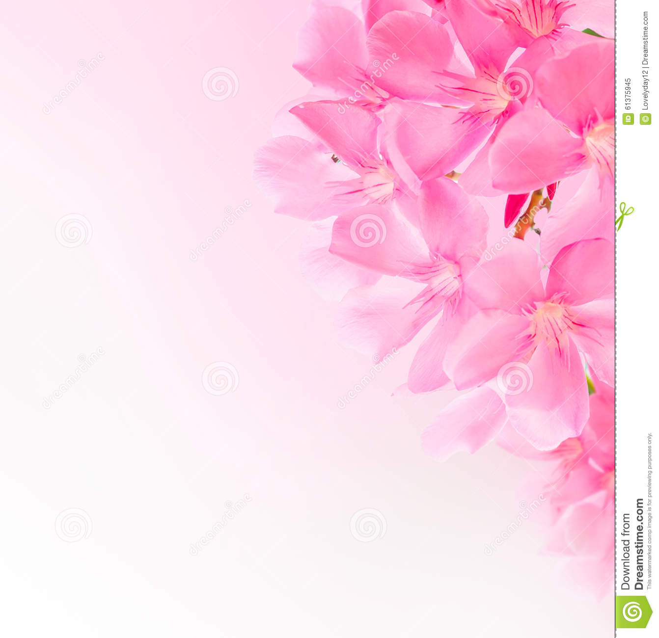 Free Ppt Backgrounds Desktop Wallpaper Flower Pink Lotus: Spring Border Or Background With Pink Blossom Stock Photo
