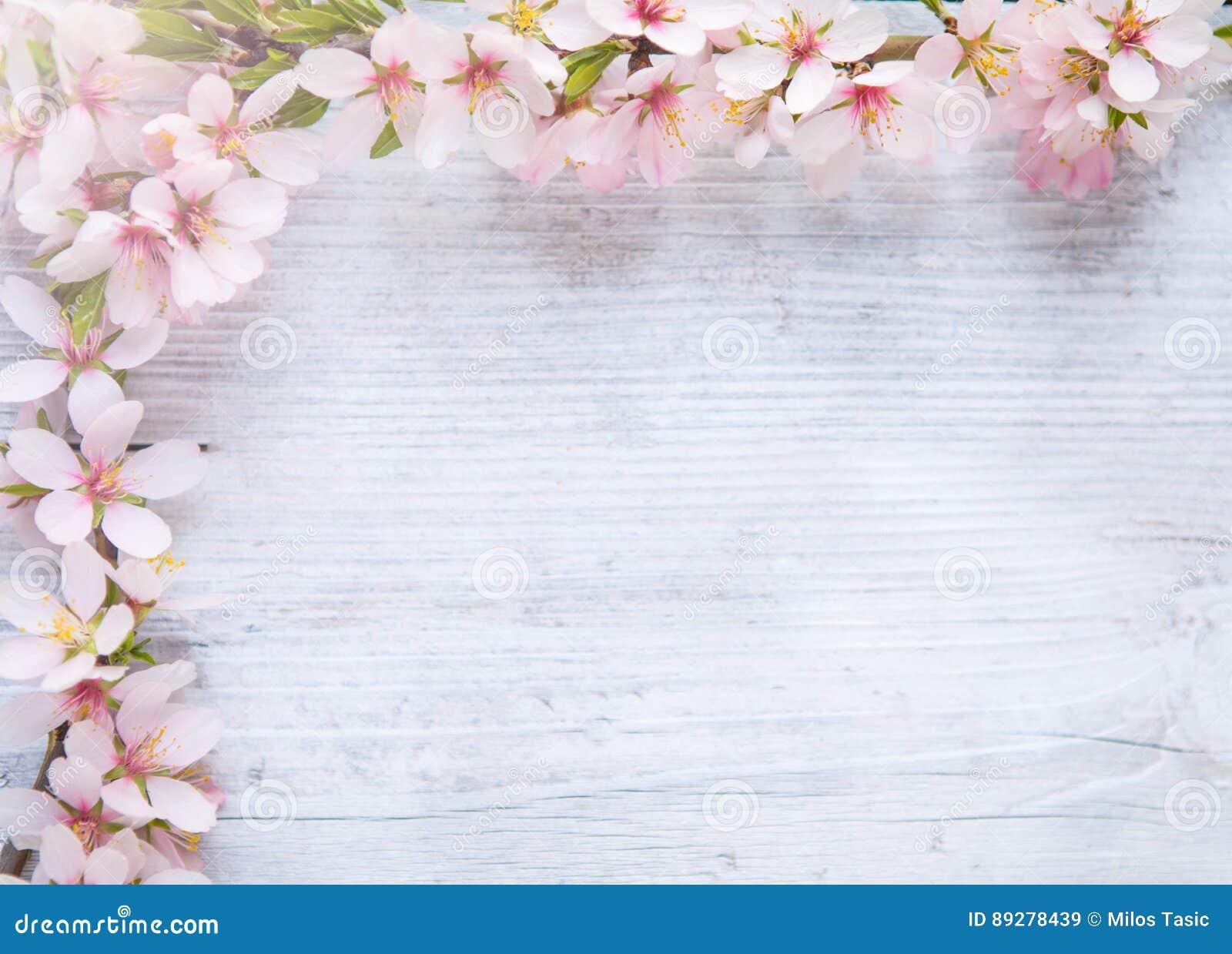 Spring Border Background With White Blossom Stock Image Image Of Springtime White 89278439 Spring bouquet printable flower border spring flowers digital | etsy. dreamstime com