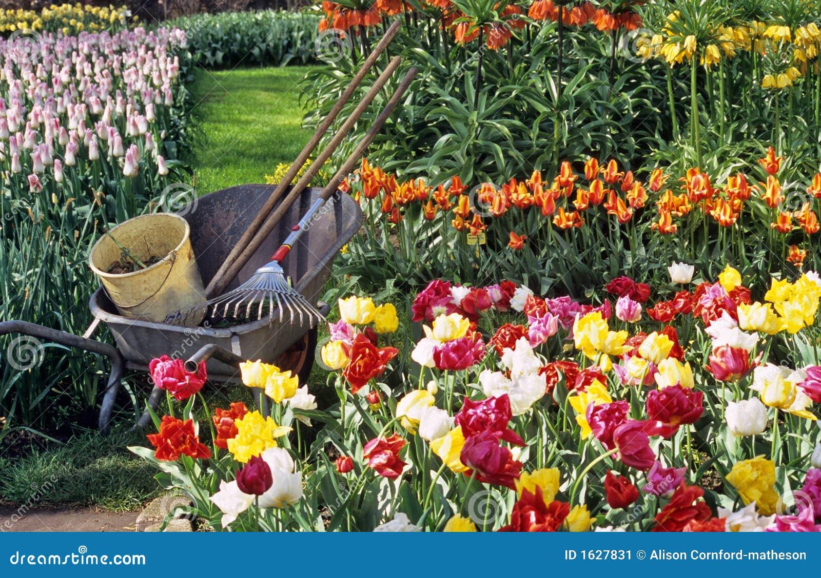 Spring bulb gardening stock image image 1627831 for Spring bulb garden designs