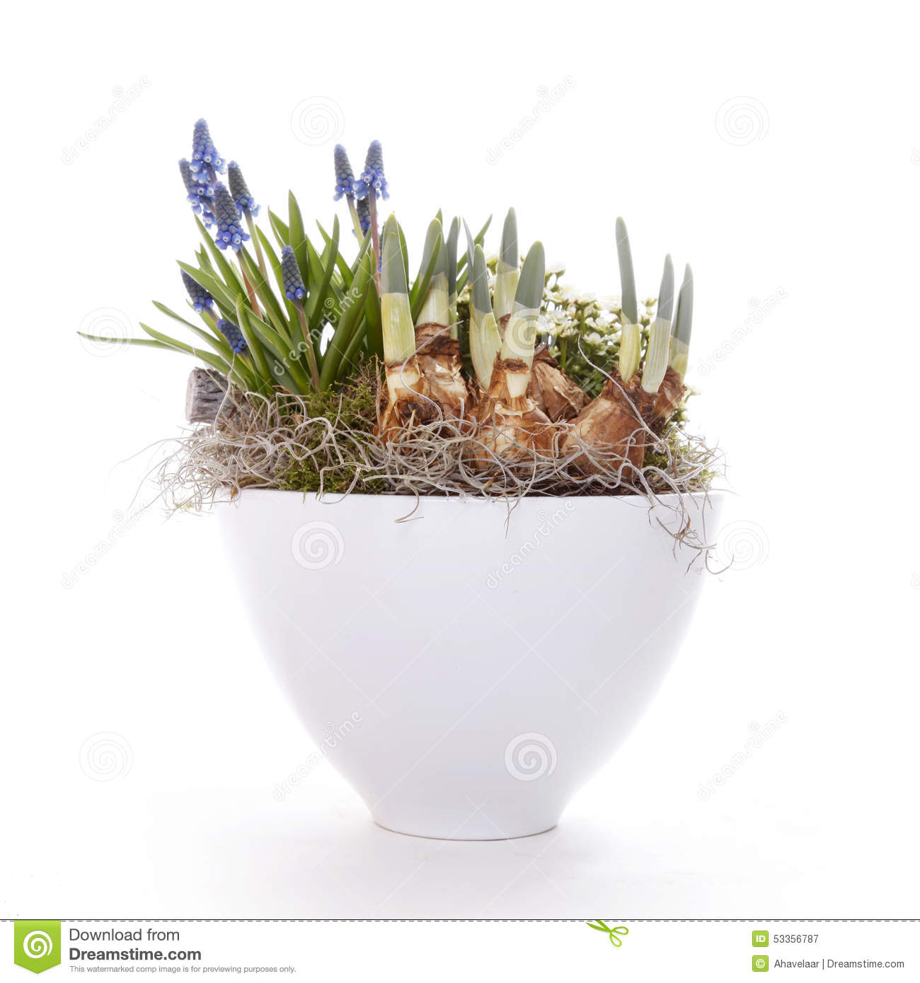 Spring Bulbs And Flowers In Pot Stock Image Image Of Close Floral