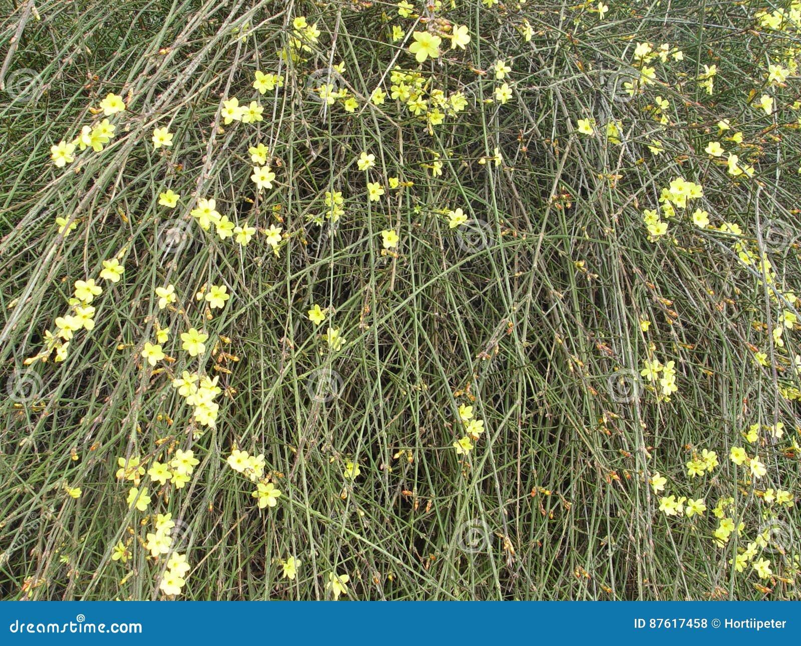 Spring Bushes Stock Illustration Illustration Of Spring 87617458