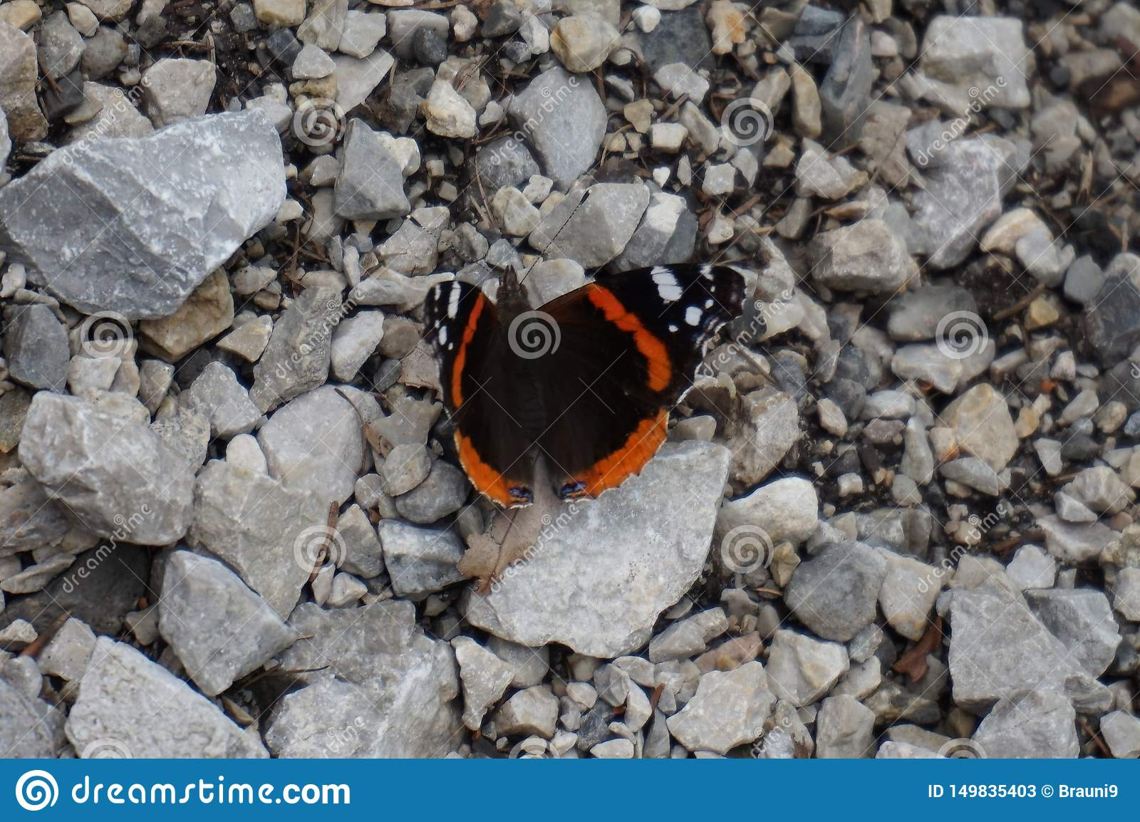 In spring, the Butterfly is basking in the sun sitting on a stone