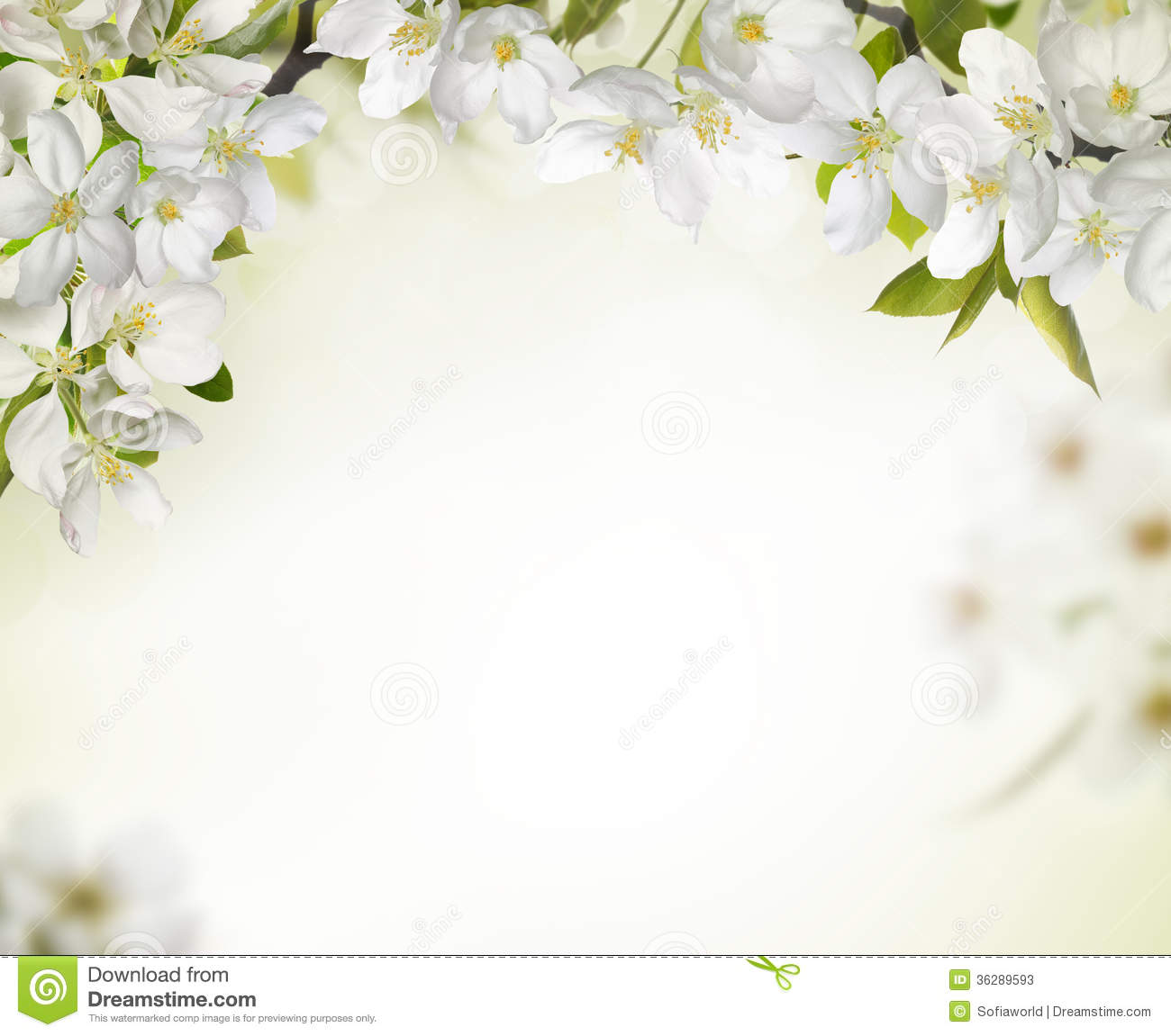 Spring Cherry Blossom Backgrounds Stock Photos - Image: 36289593