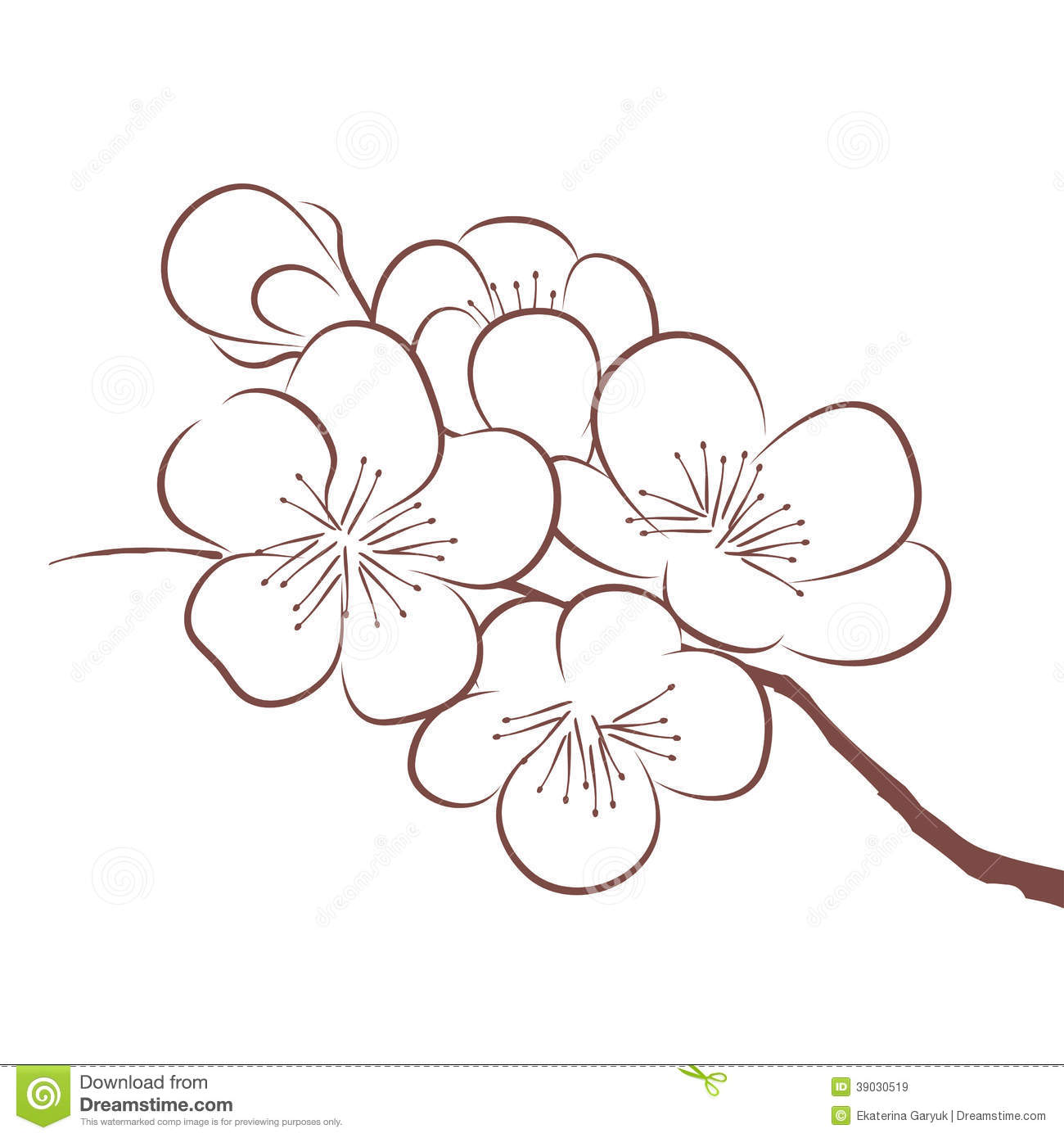 Flower Tree Line Drawing : Spring cherry blossom stock vector illustration of