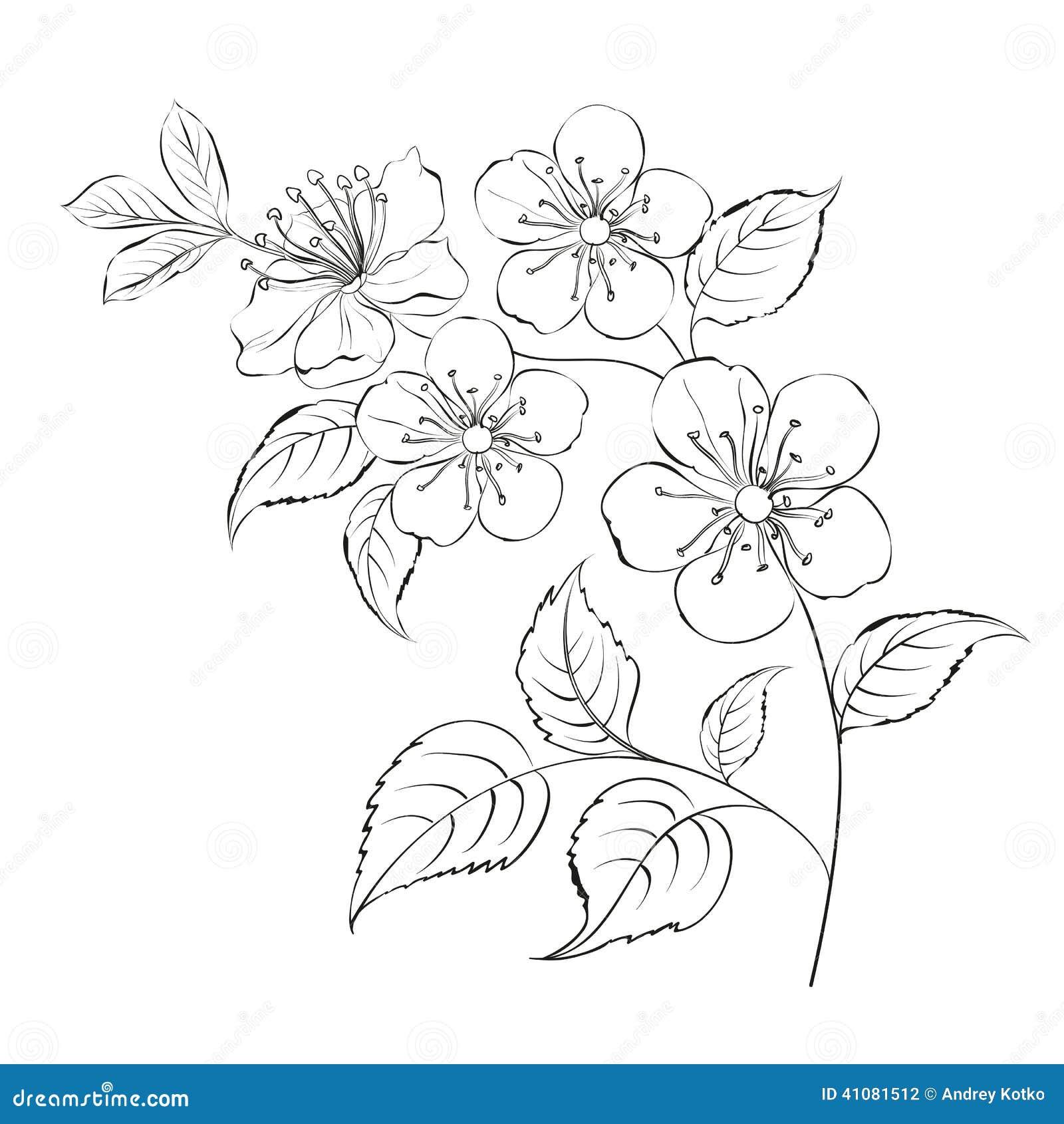 Line Art Nj : Spring cherry blossom sakura stock vector image