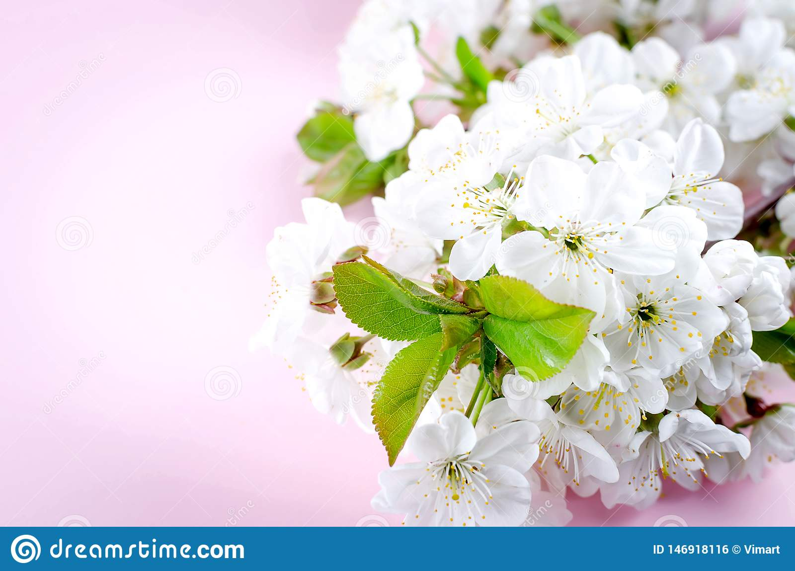 spring cherry flowers on light pink background